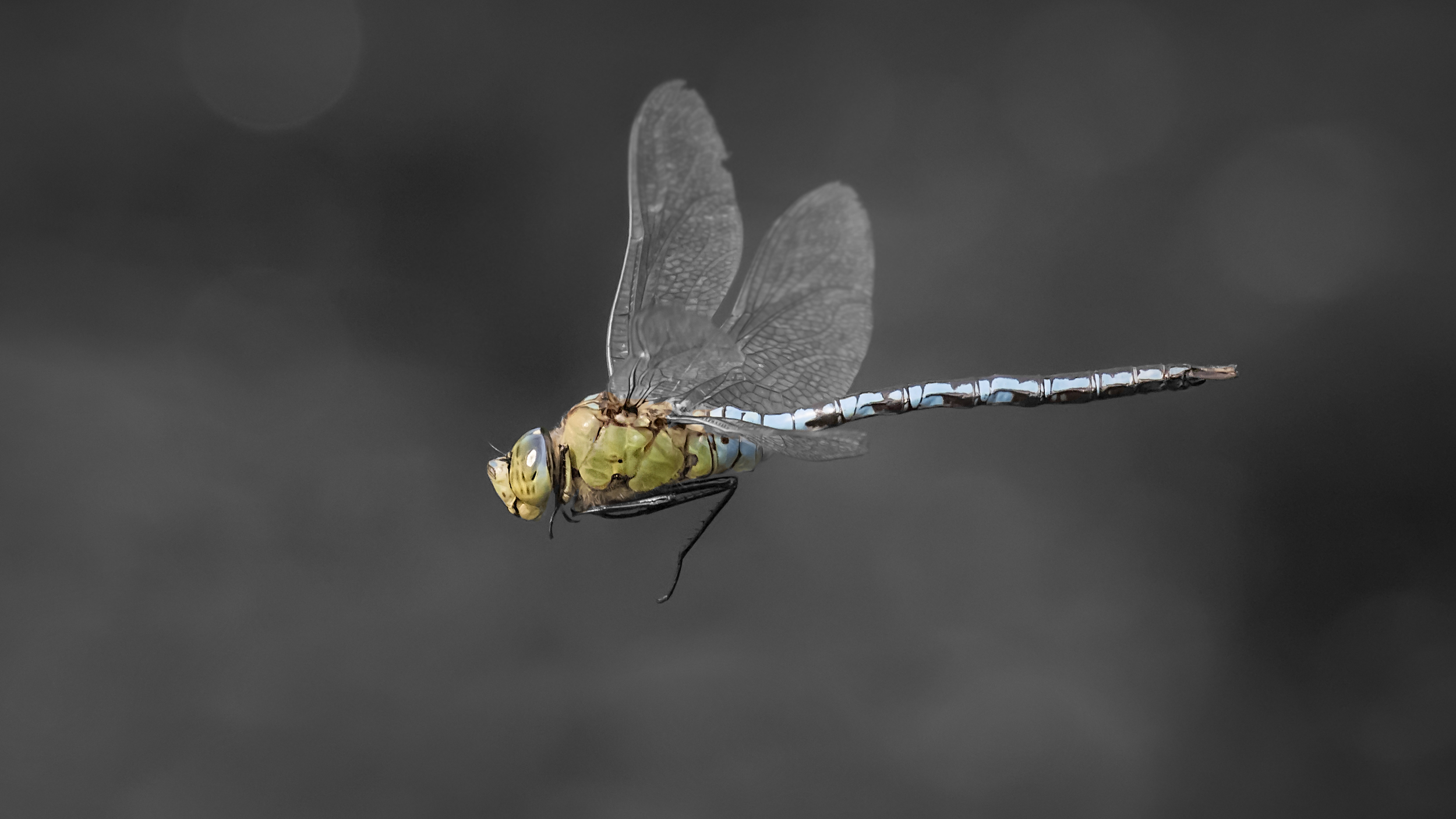 Emperor Dragonfly 22nd August.png