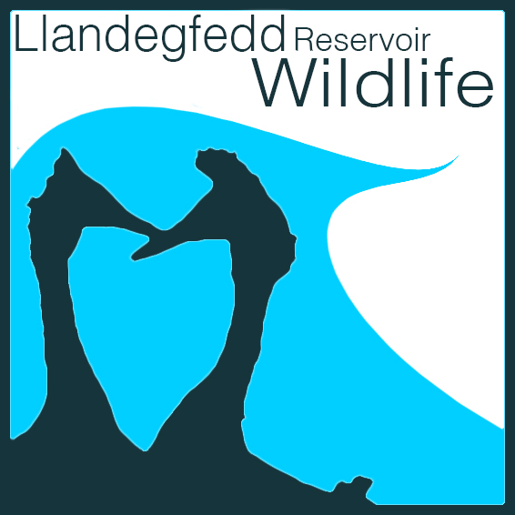 Llandegfedd Reservoir, Wildlife Community   Re-fuelling and uncovering conservation efforts at Llandegfedd, the wildlife community page helps bring awareness to protected species while sharing photographs, videos and sound clips of the rich bio-diversity found on site.