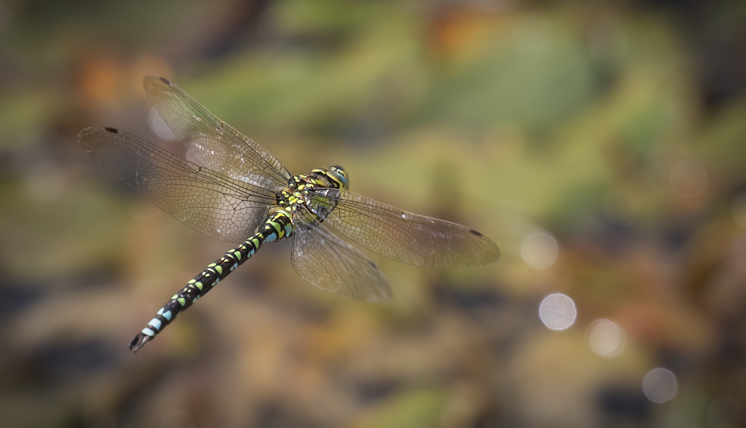 Southern Hawker Flight 27th September.png