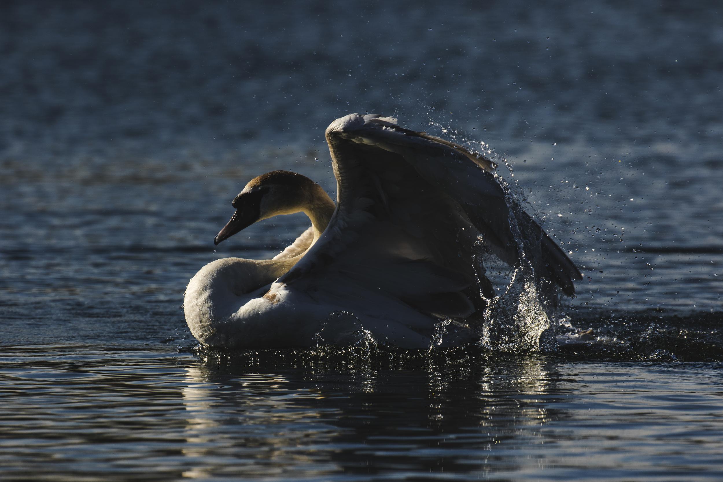 Swan Wash 2nd April Dark.jpg