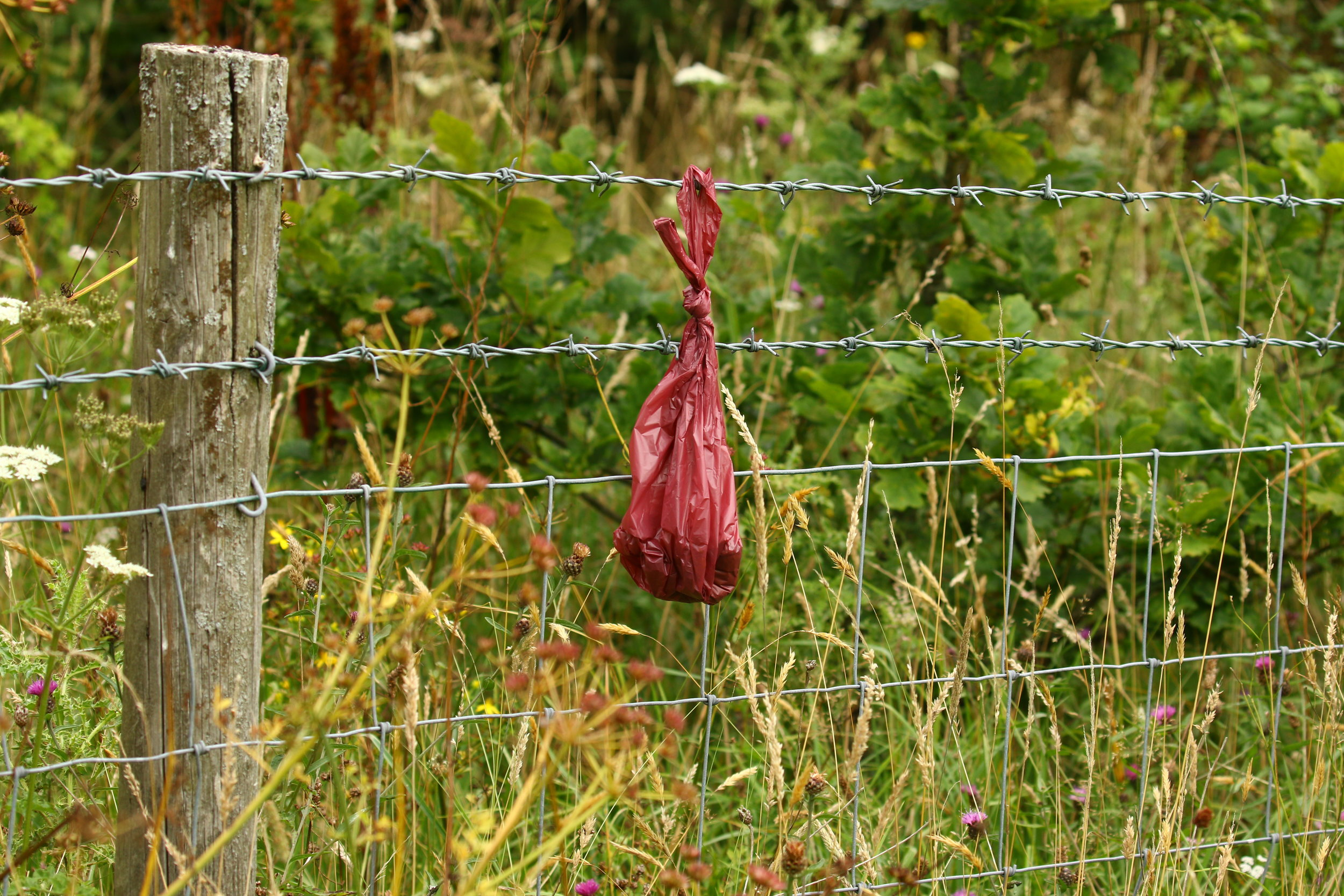 Dog poo on Fence Llandegfedd