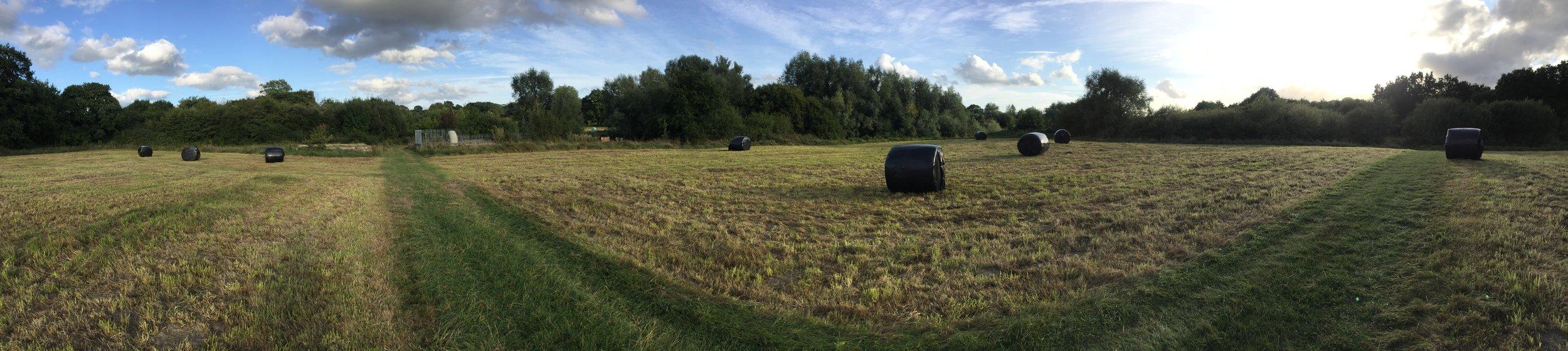Llandegfedd Wild Flower Meadow Hay Cut