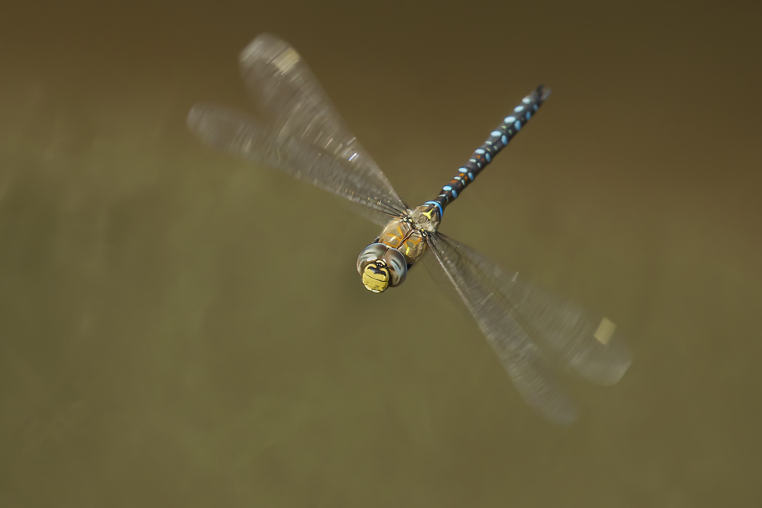 Migrant Hawker Banking