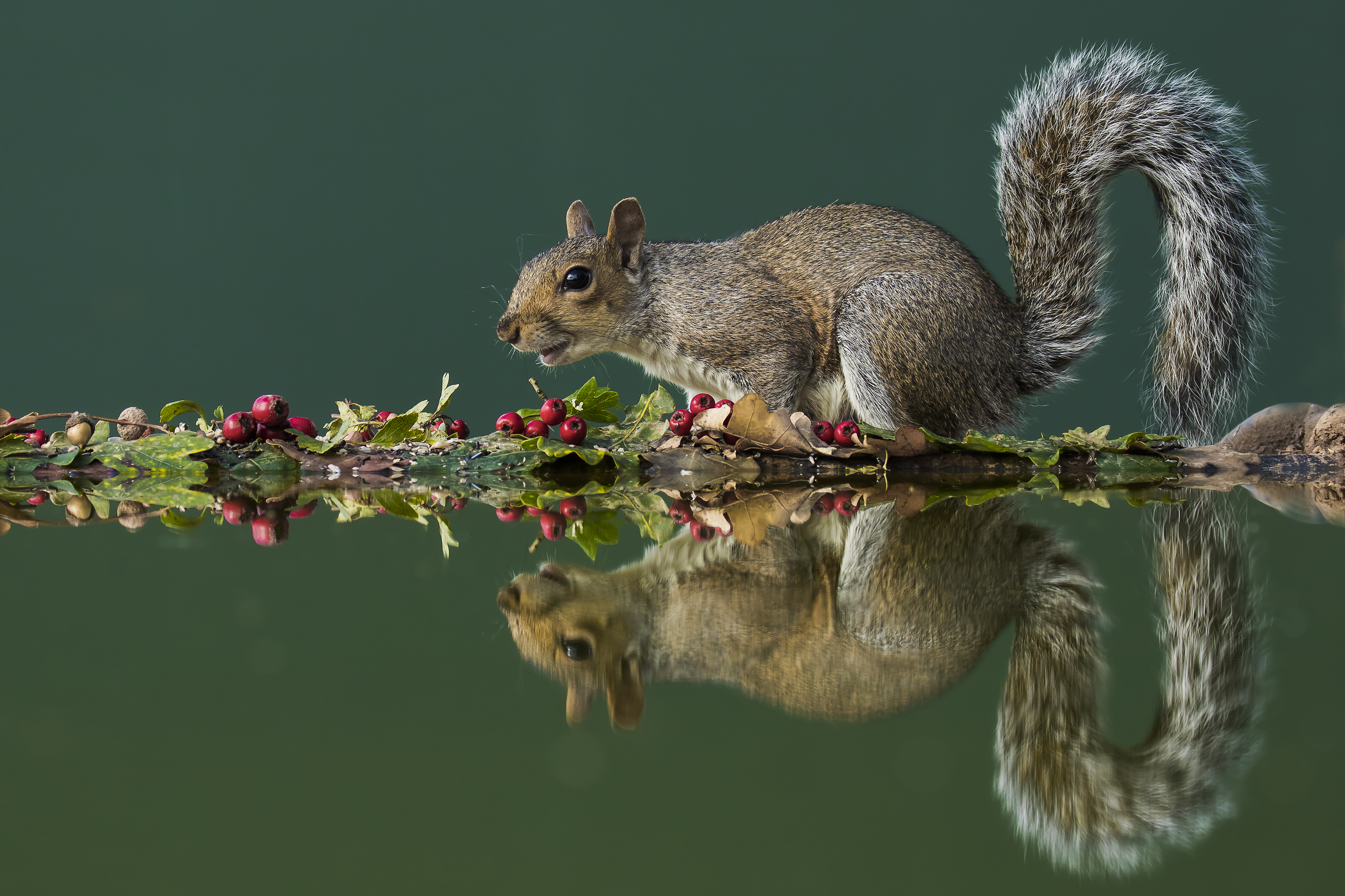 Squirell Soft Coloured Reflection 2nd October.png