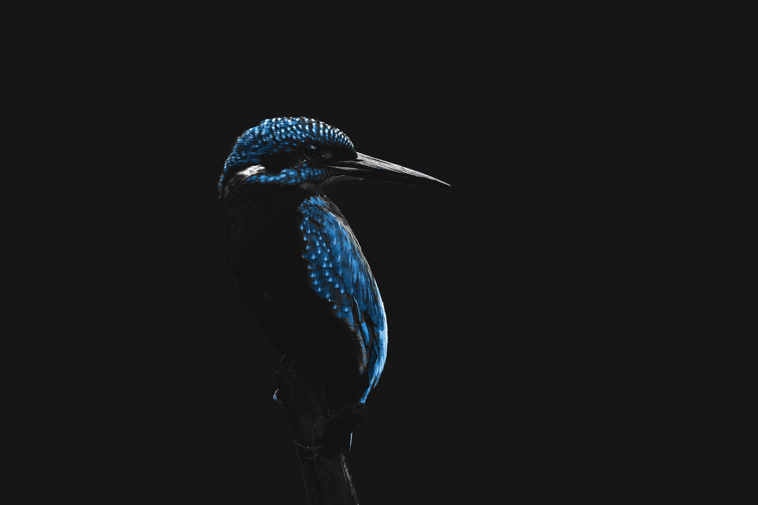 Kingfisher Neon