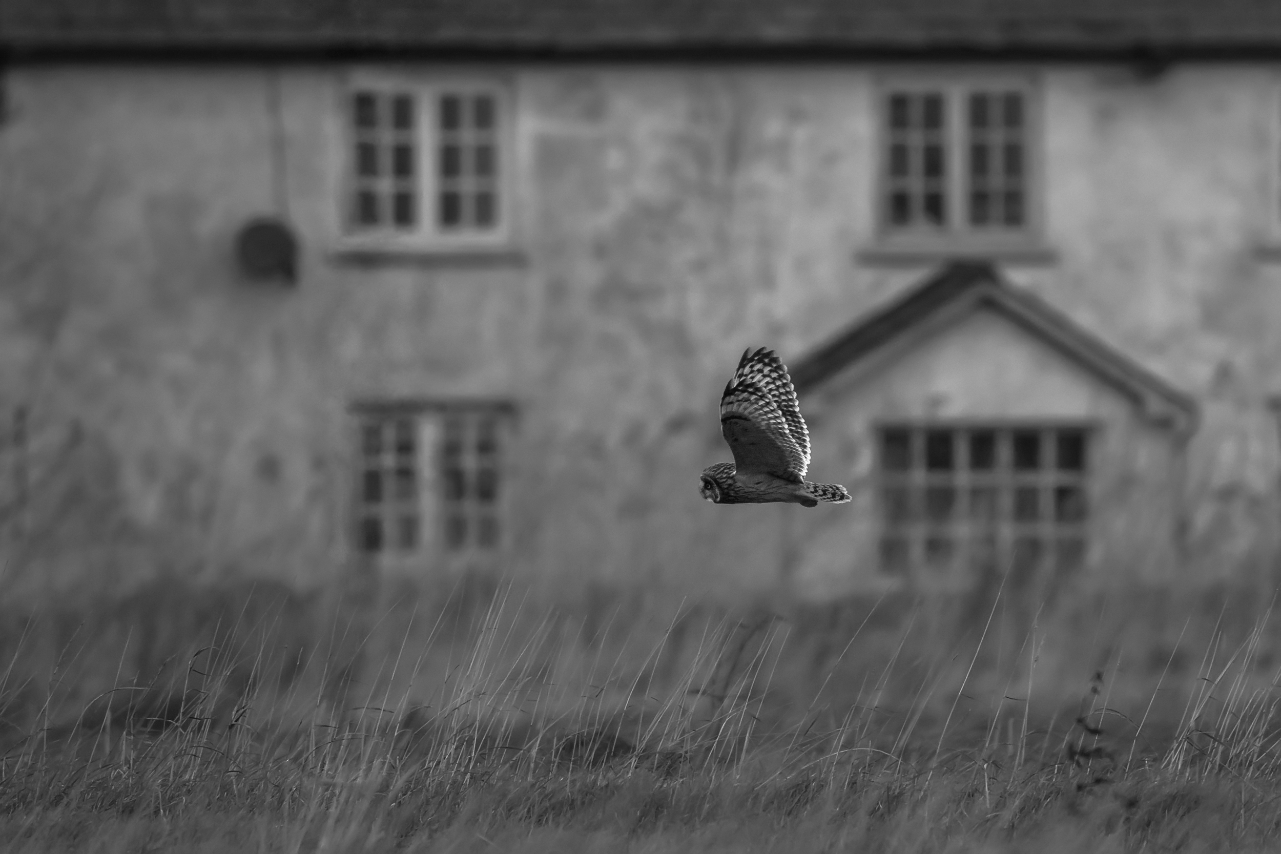 Short-eared Owl Atmospheric House.png
