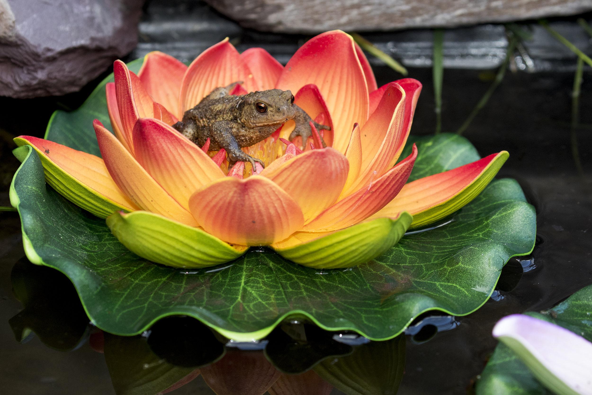 Fake Toad?