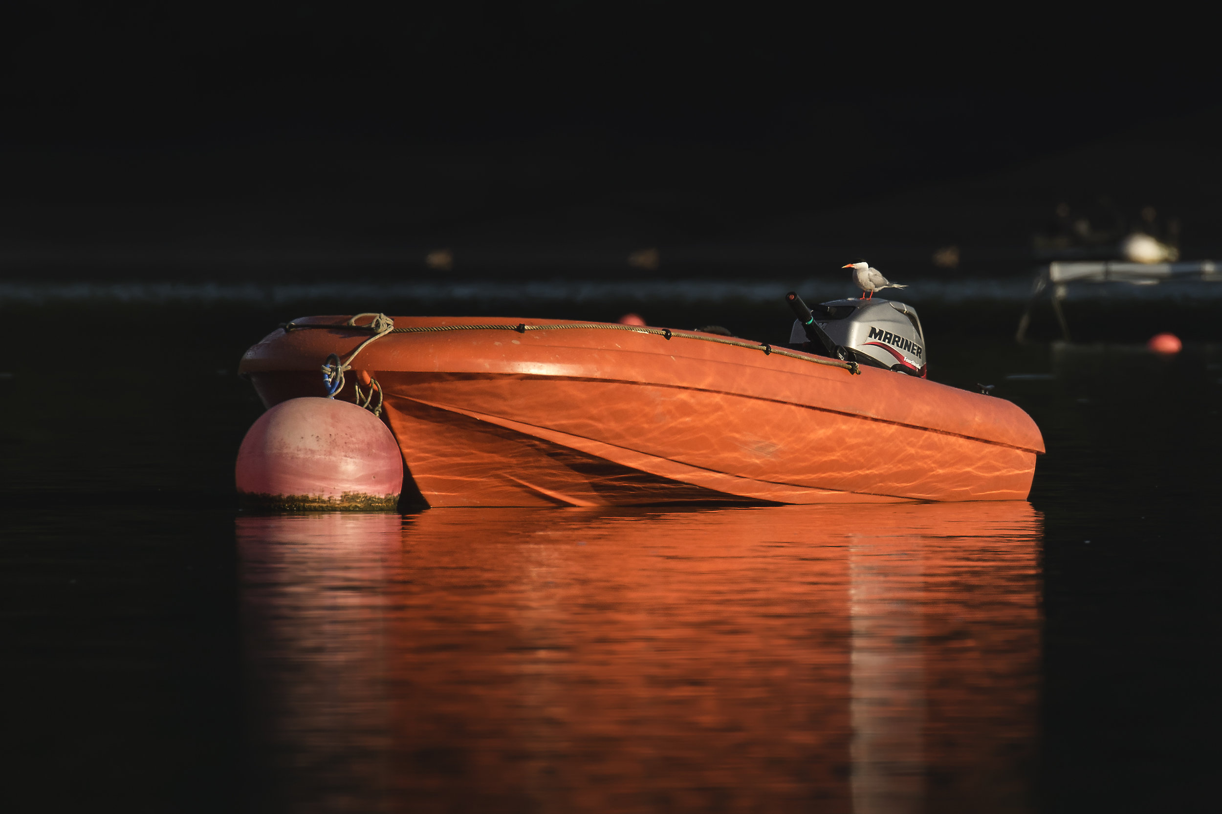 Tern Boat 30th July.jpg