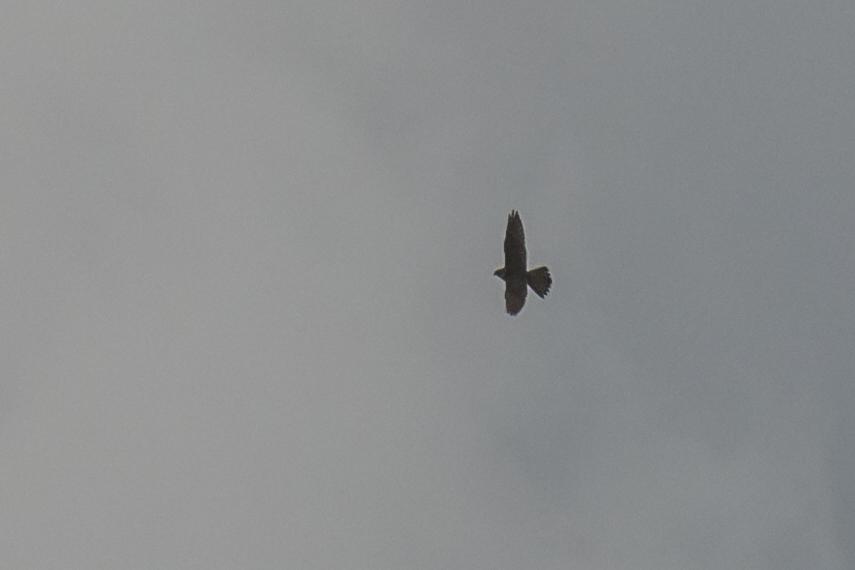 Merlin 23th August.jpg