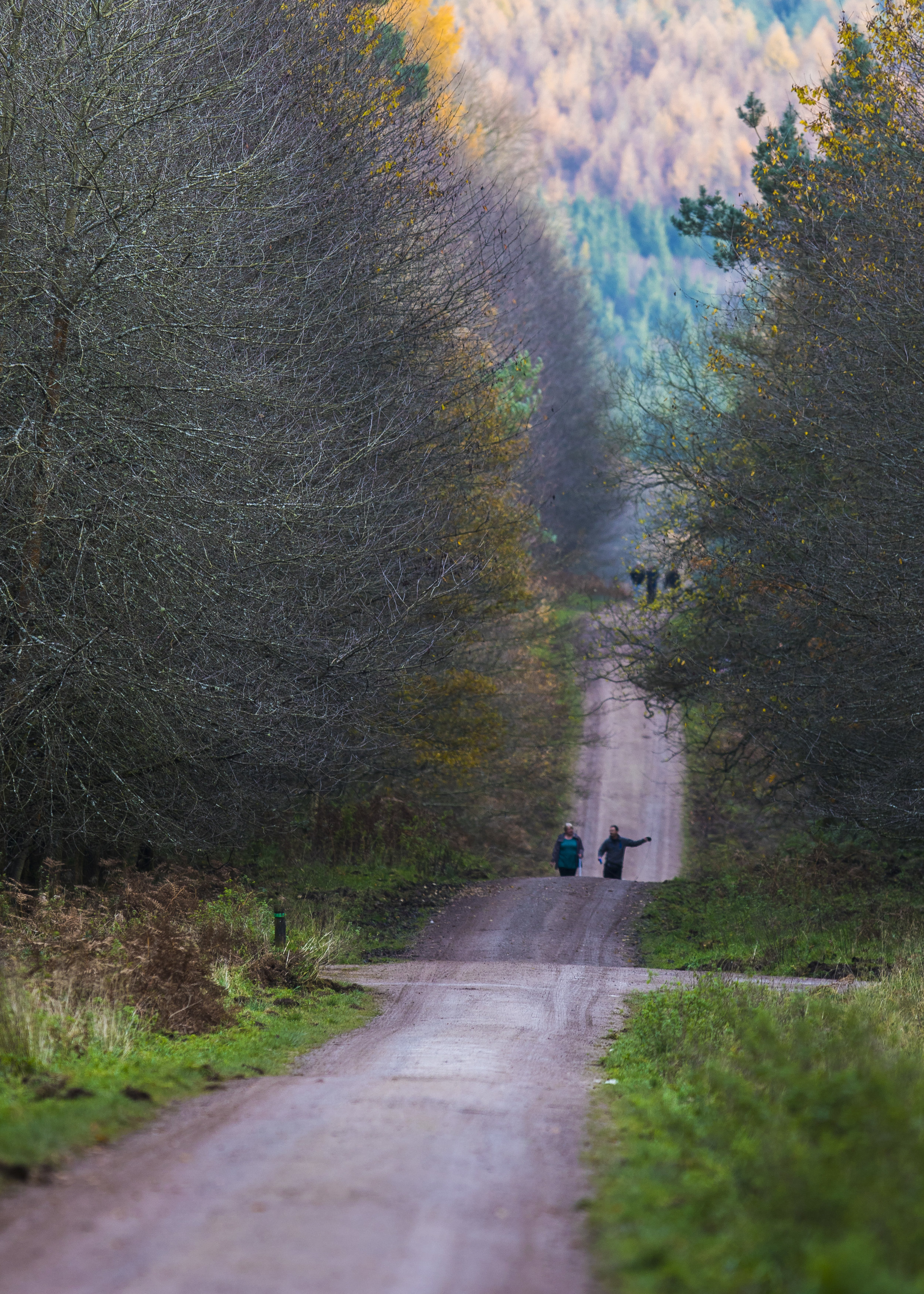 Forest of Dean Walk 17th November.jpg