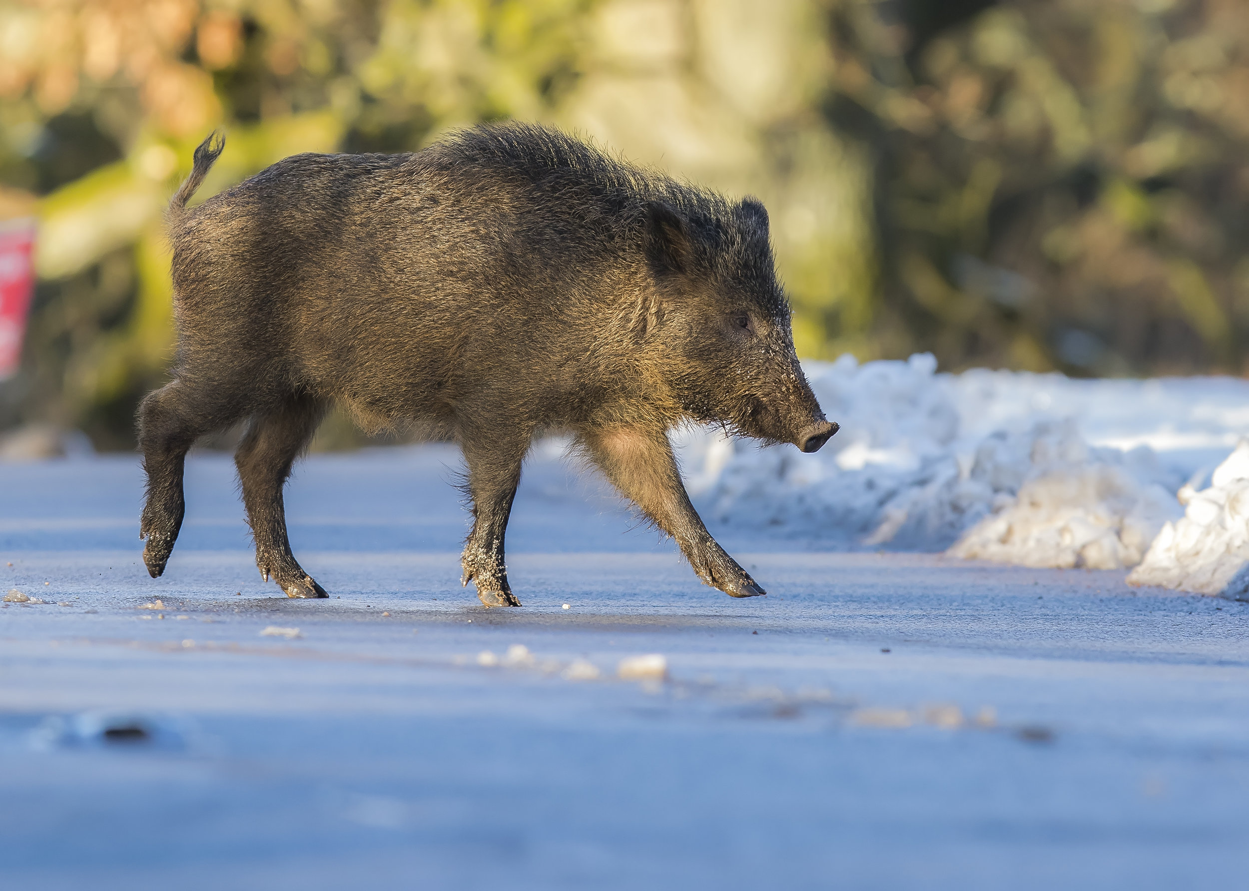 Boar Icy Road 28th December.jpg