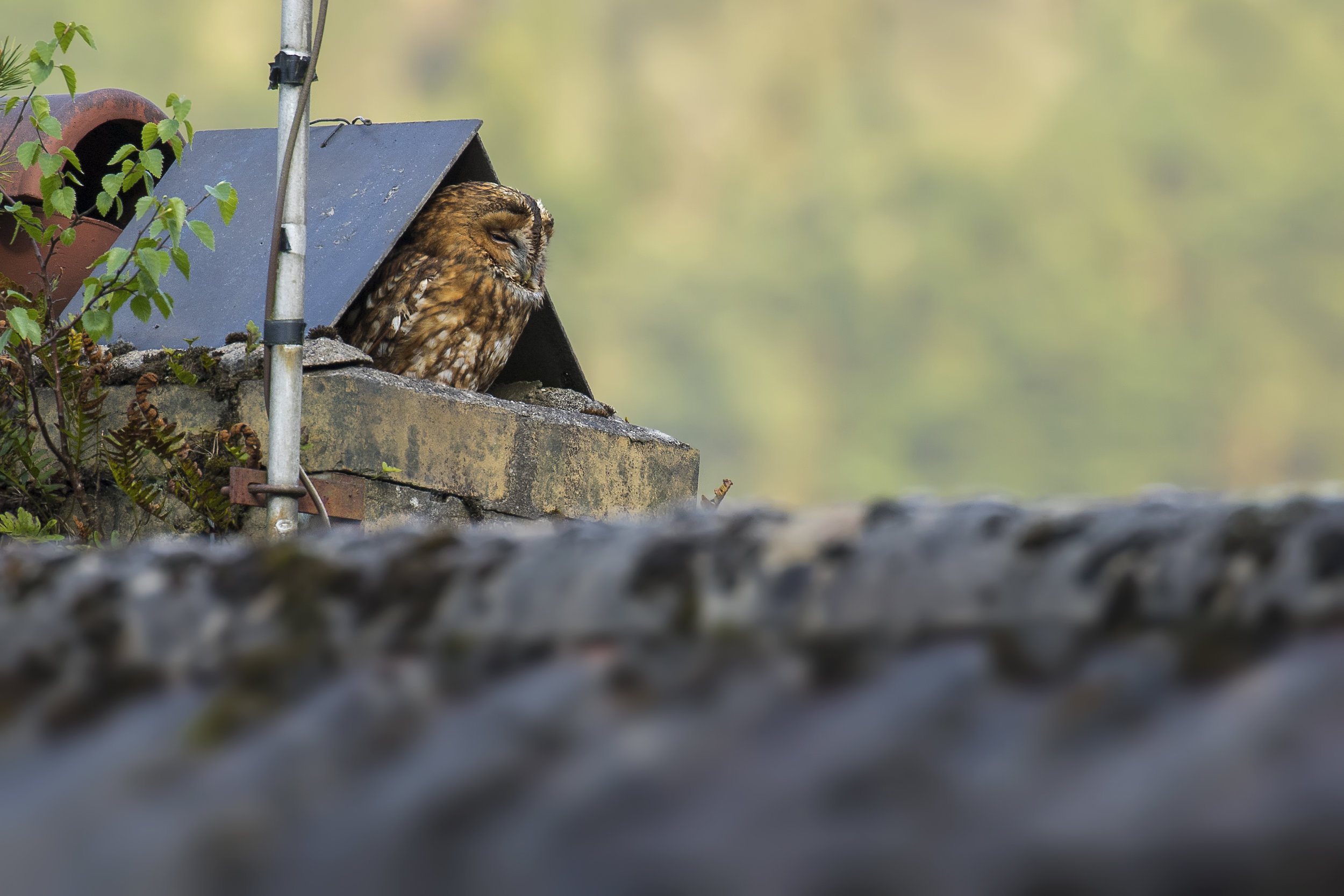 Tawny Owl House 2nd May.jpg