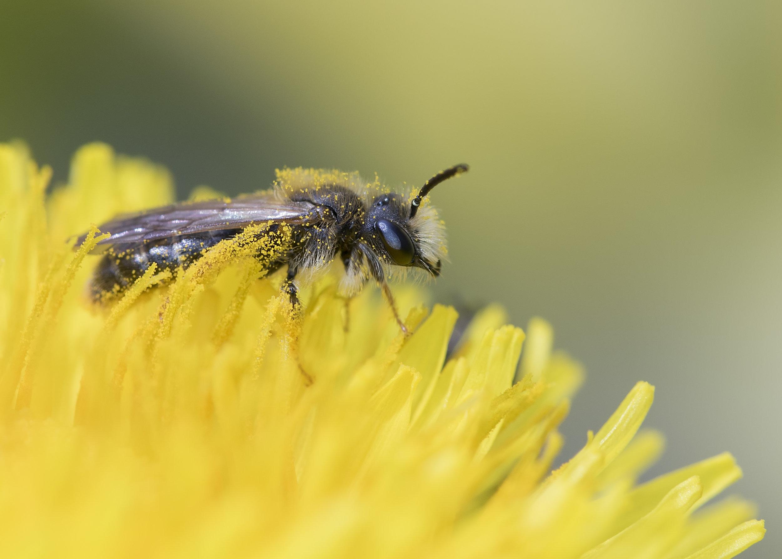 S.Bee 26th April.jpg