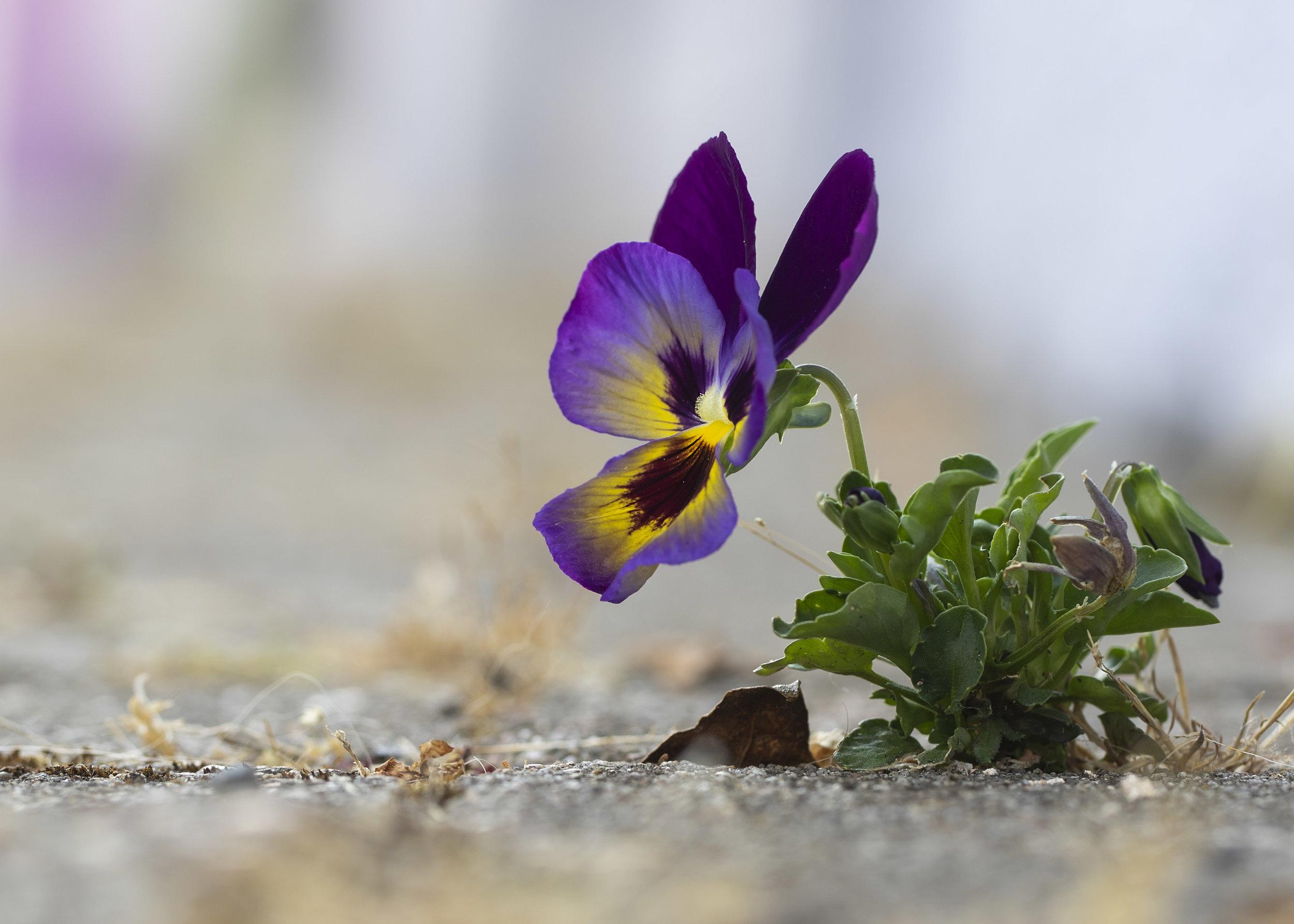 Floor Flower.jpg