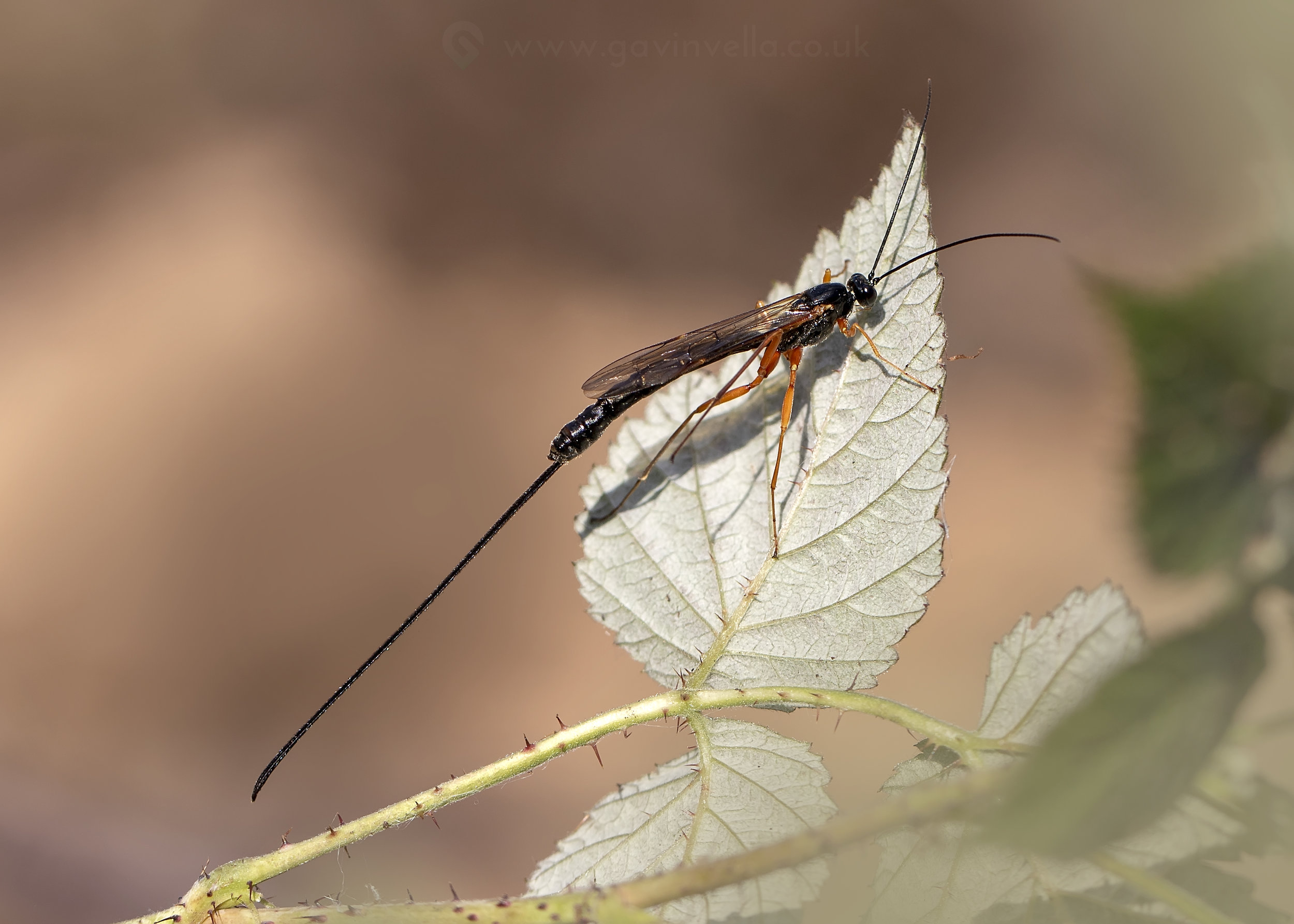 Sabre Wasp W 29th October copy.jpg
