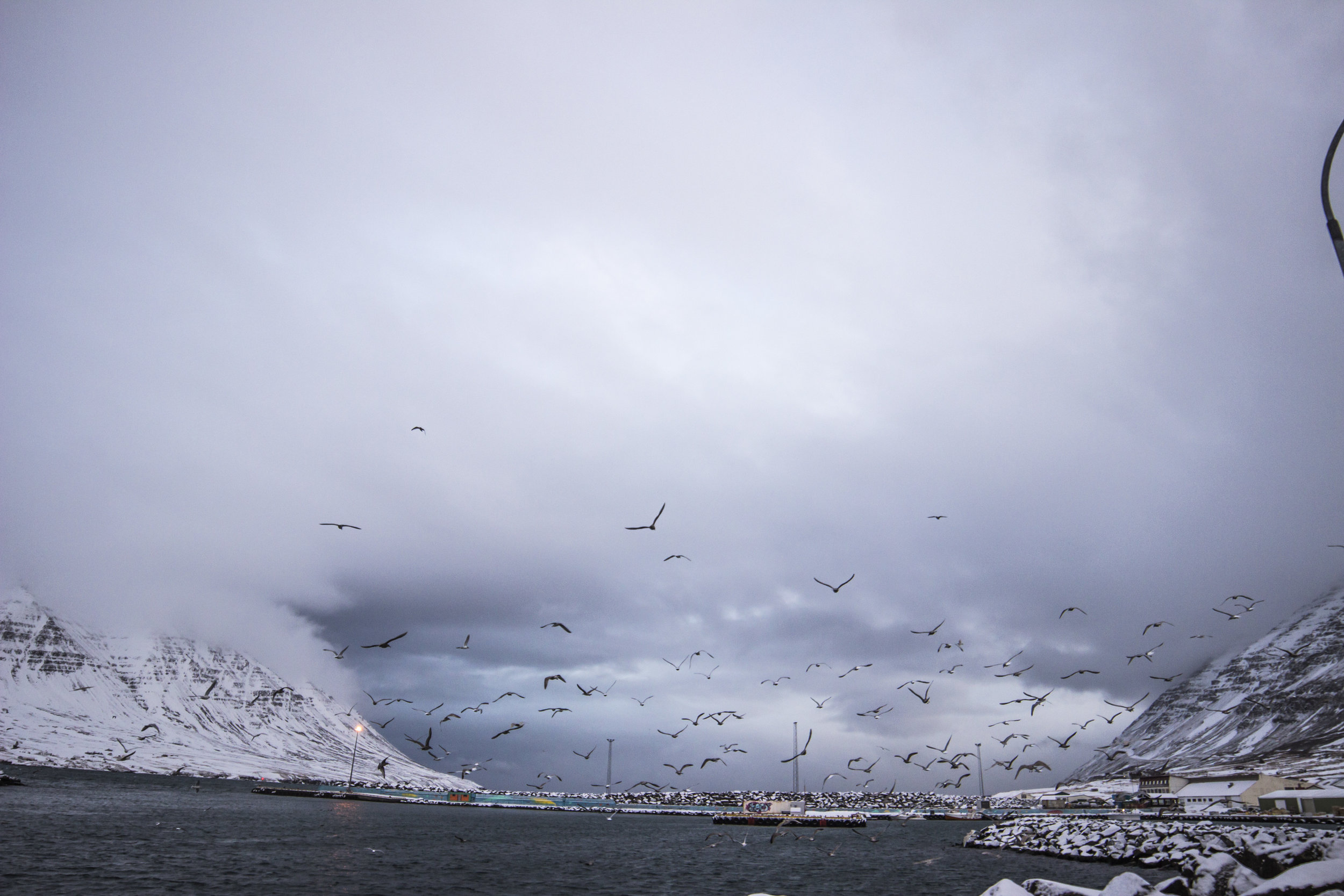 A smell of fish from factories and fishermen permeates the cold air