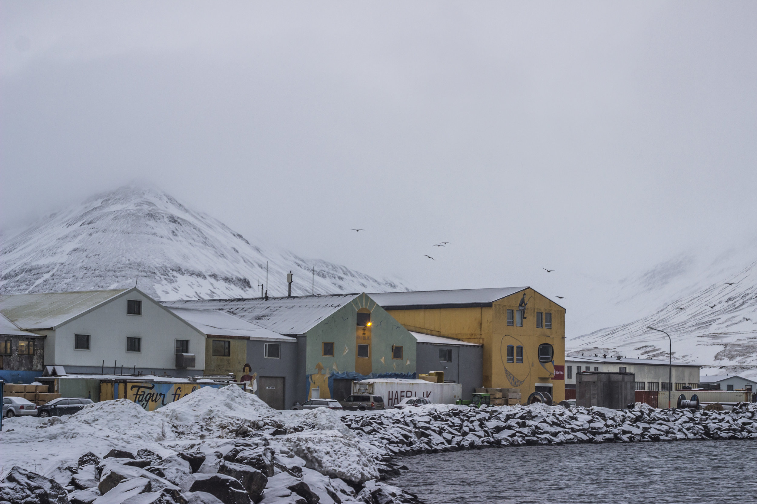 Ólafsfjörður's harbor is decorated with murals from years of artists passing through