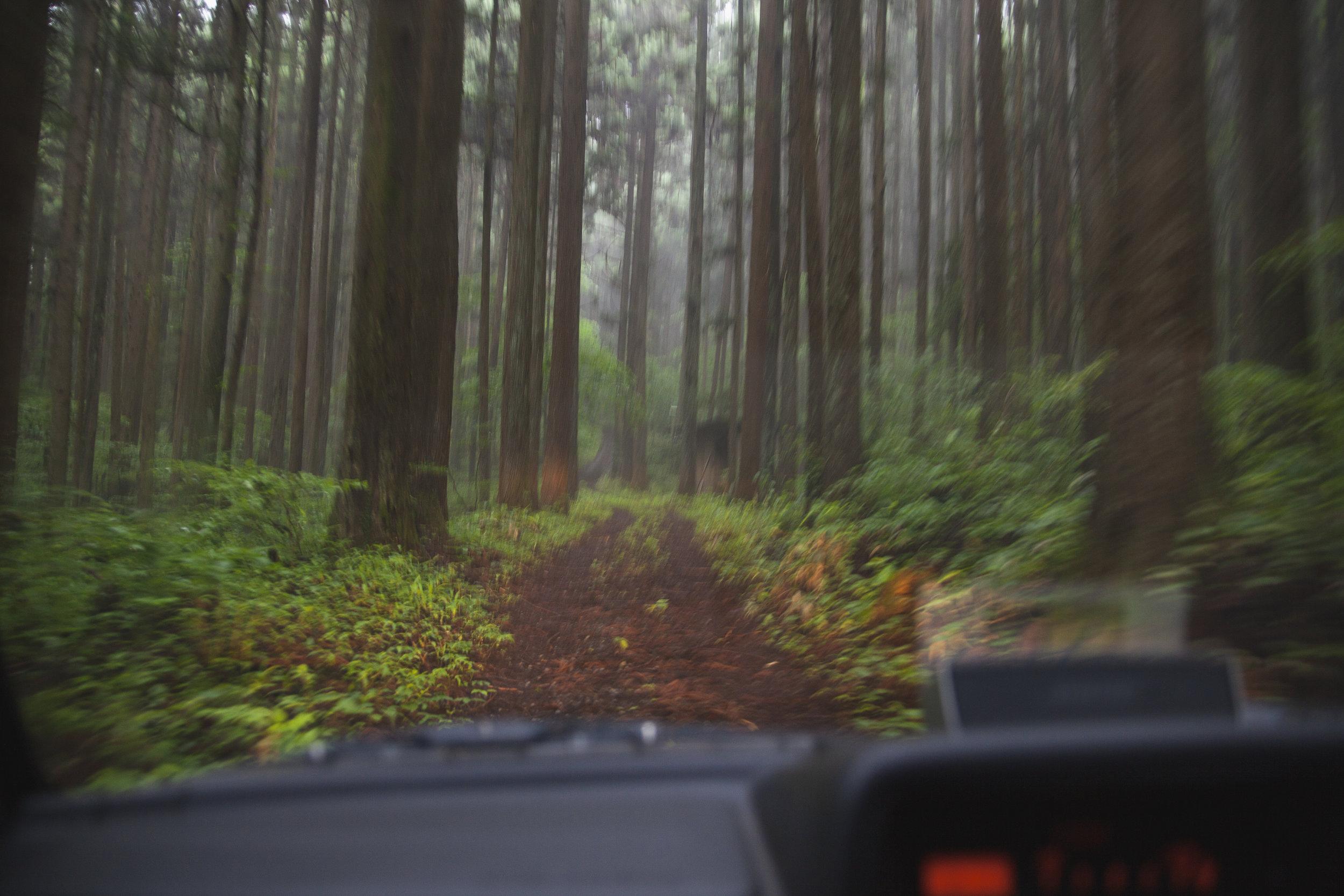 Japan268.jpg
