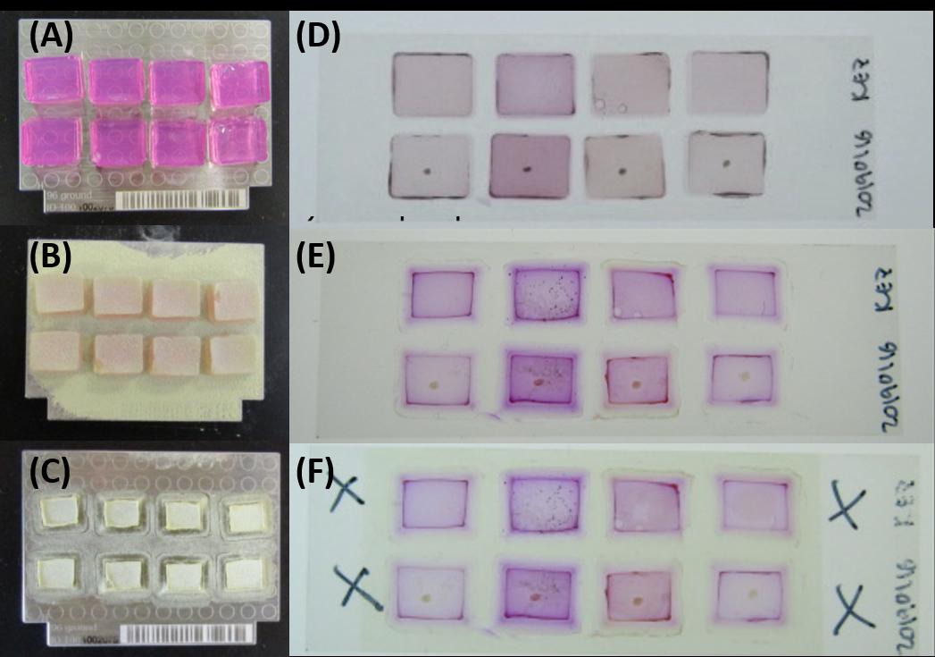 Figure 2.  (A) Samples post-incubation; (B) Samples after sieved matrix application; (C) Samples postdesiccation; (D) Samples post-incubation; (E) Samples post-desiccation; (F) Samples after sprayed matrix application.