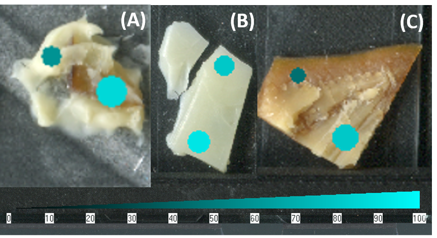Figure 7.  The SepQuant® dropletProbe software interface allowed for easy visualization of intrasample variability as it related to spatial features of the sample. (A) Proline was more abundant in the mushroom of the triple cream brie cheese with mushrooms than in the body of the cheese. (B) Valine was more abundant in the air-exposed hole of the Emmantal cheese than the inside. (C) Leucine was more in the inner rind than the outer rind of the gouda cheese.