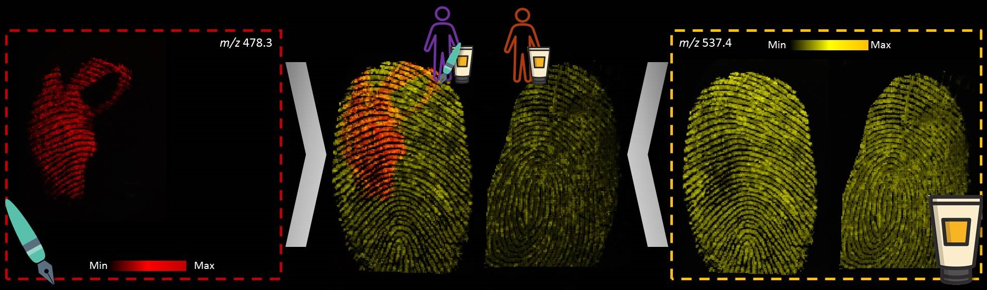 Figure 2.  MALDI MSI analysis of fingerprints was able to distinguish between Subject 1 who used both a blue ink pen ( m/z  478.3) and hand lotion ( m/z  537.4) during the day versus Subject 2 who only used hand lotion ( m/z  537.4).