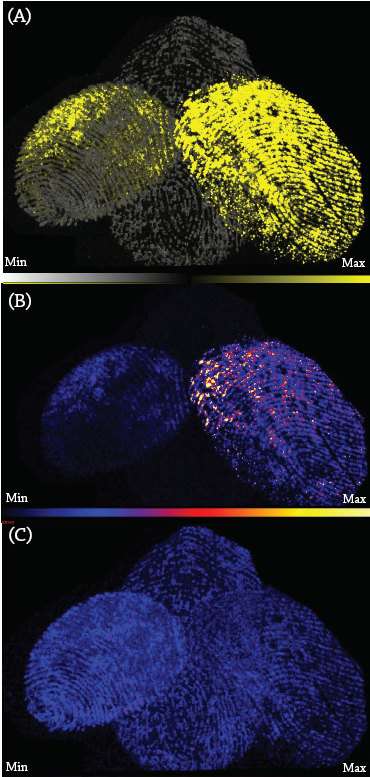 Figure 4.  (A)  m/z  691 was identified only in the fingerprints of subjects 4 and 6. (B)  m/z  298.3 was also identified only in the fingerprints of subjects 4 and 6. (C)  m/z  1142 was identified in all three subjects' fingerprints. It is possibly an exogenous lipid compound from the soap at M4i.