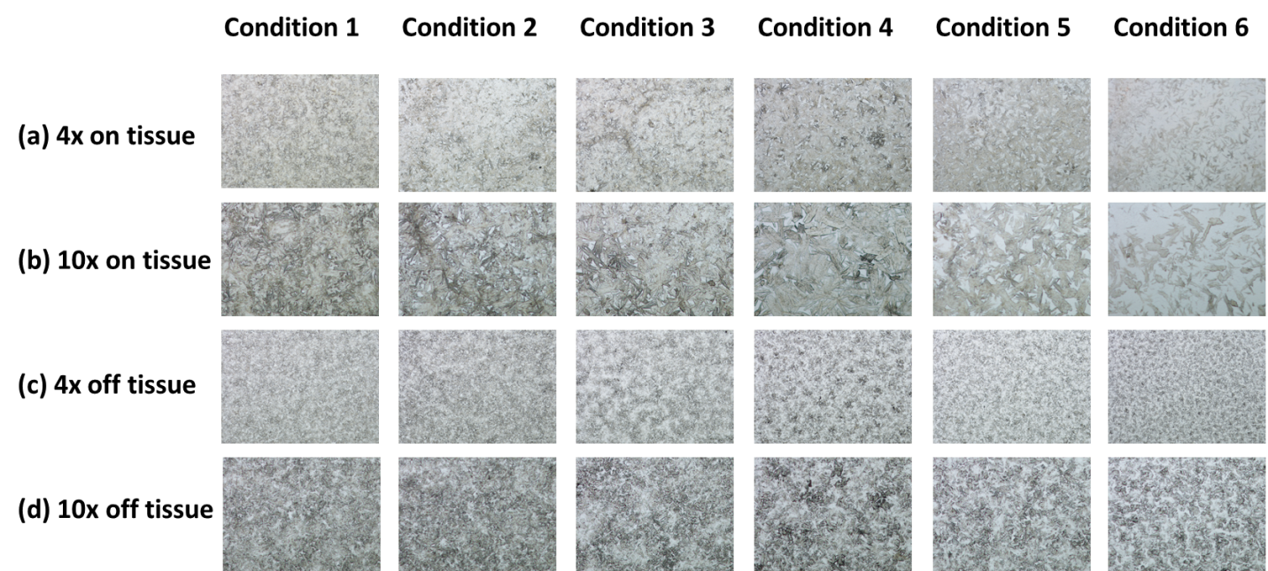 Figure 1.  Microscopic pictures of matrix coated slides. (a) 4x magnified on-tissue images; (b) 10x magnified on-tissue images; (c) 4x magnified off-tissue images; (d) 10x magnified off-tissue images.