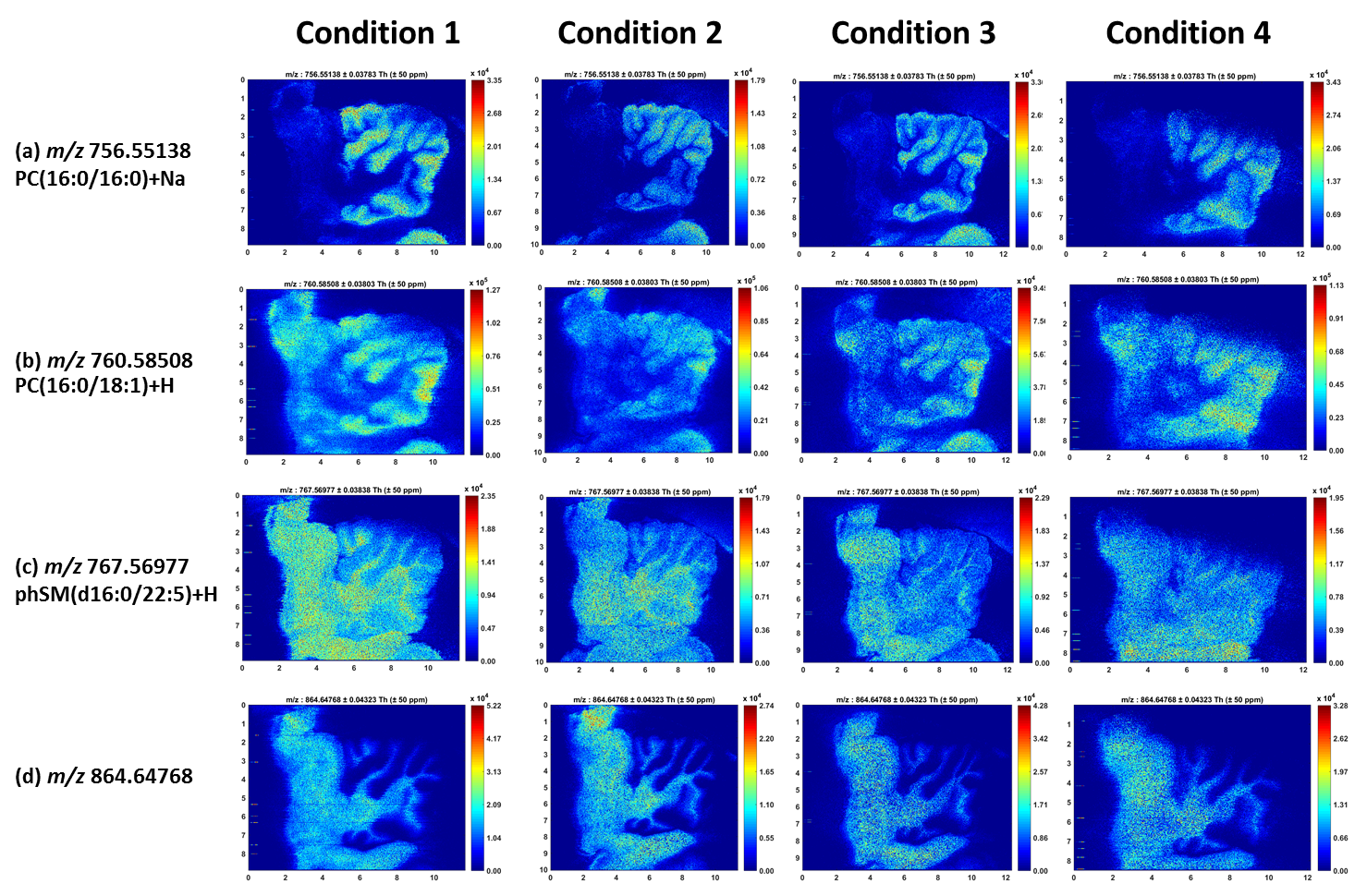 Figure 2.  MS images of lipid species detected on rat brain sections at each condition. The  m/z  values, tentative lipid identification and MSI results are listed.