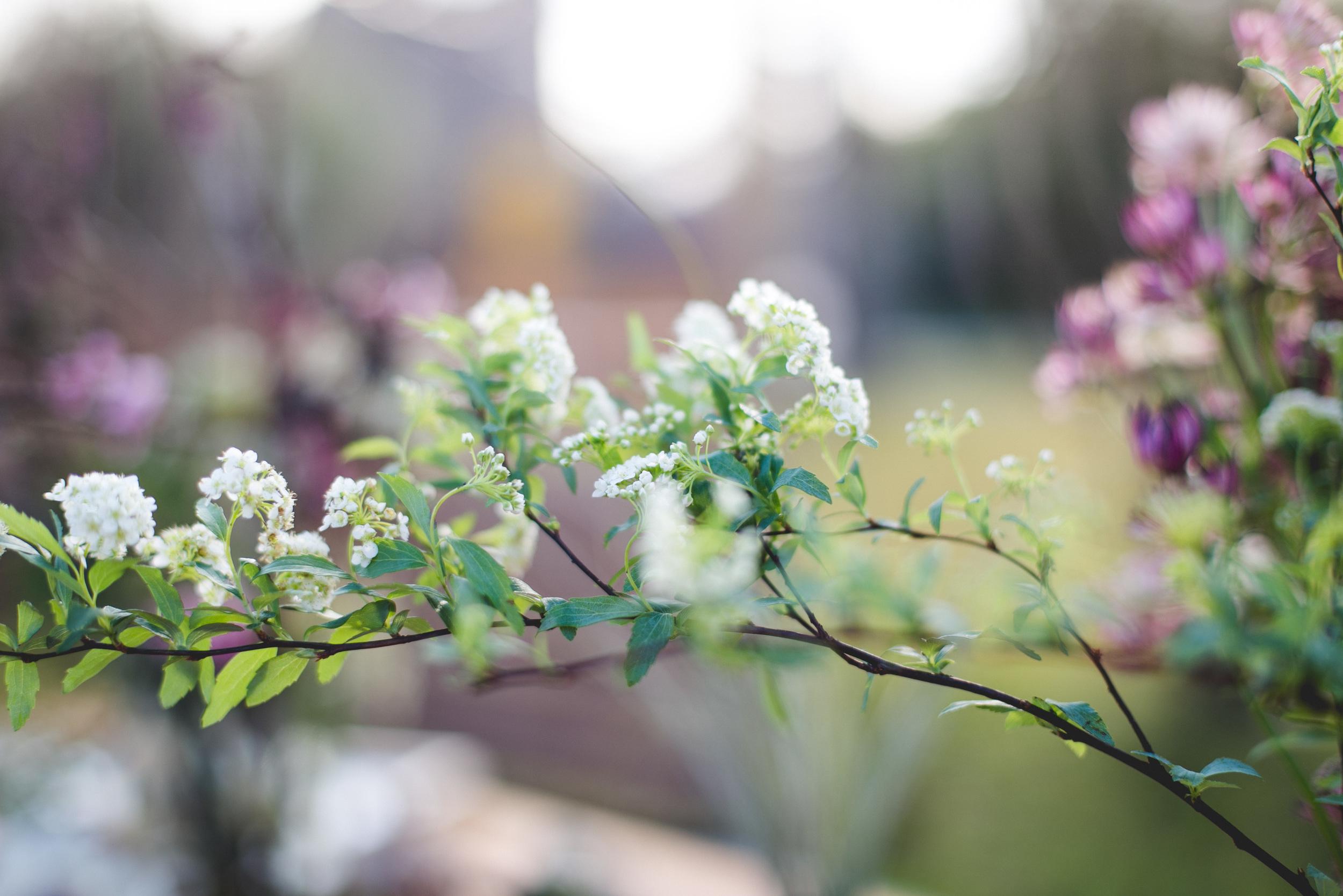 flowersonflowers-51.jpg