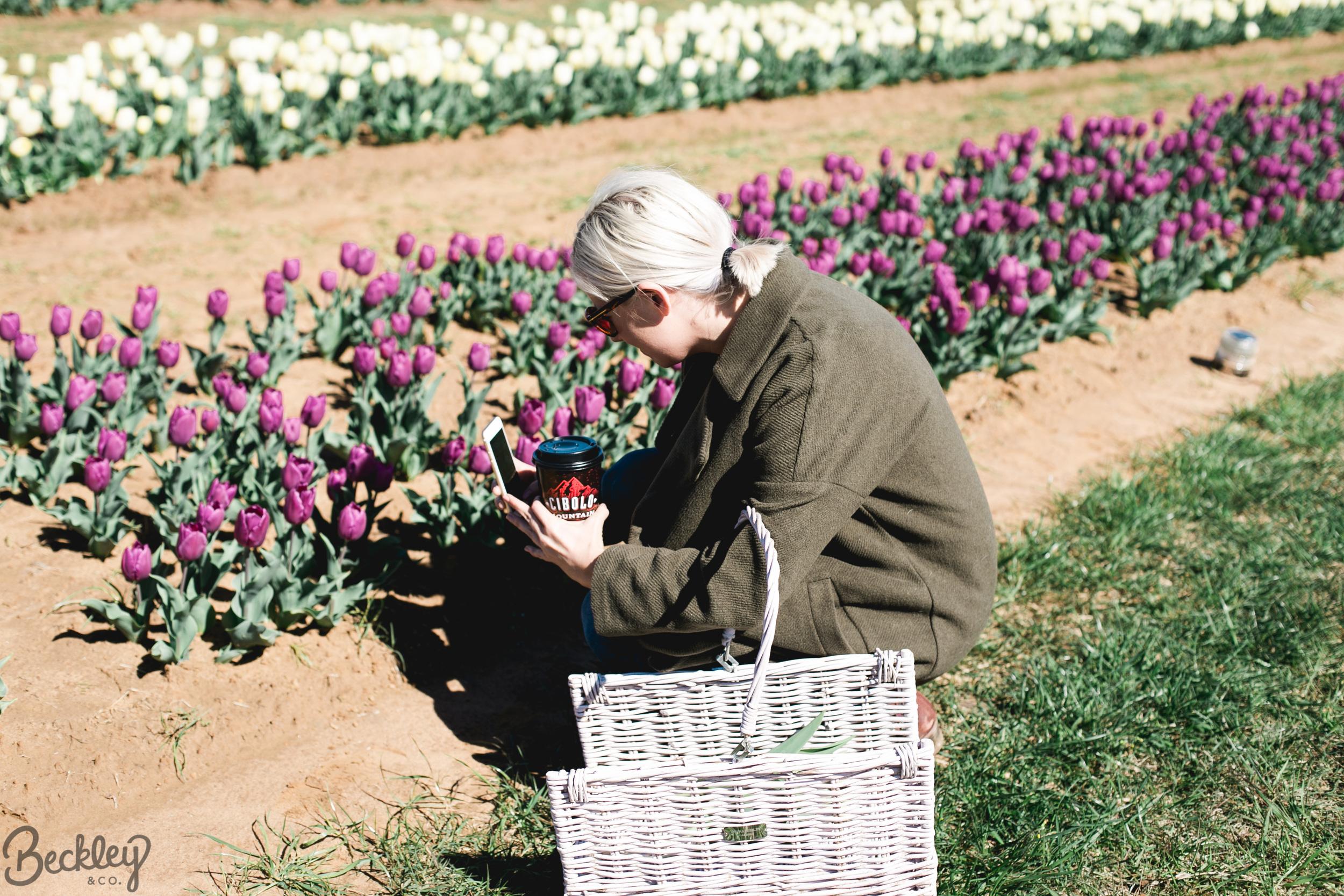 tulips-11.jpg