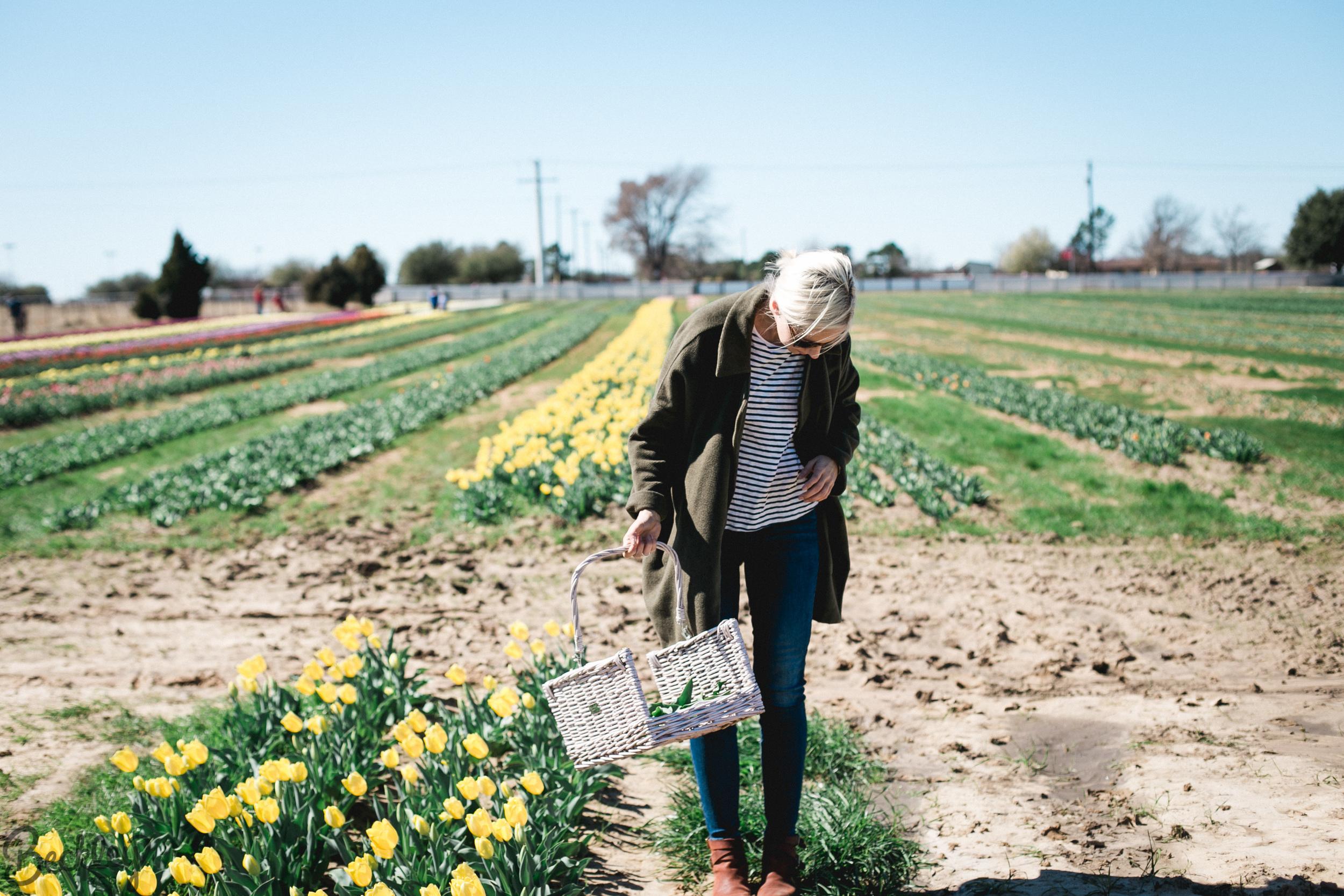 tulips-24.jpg
