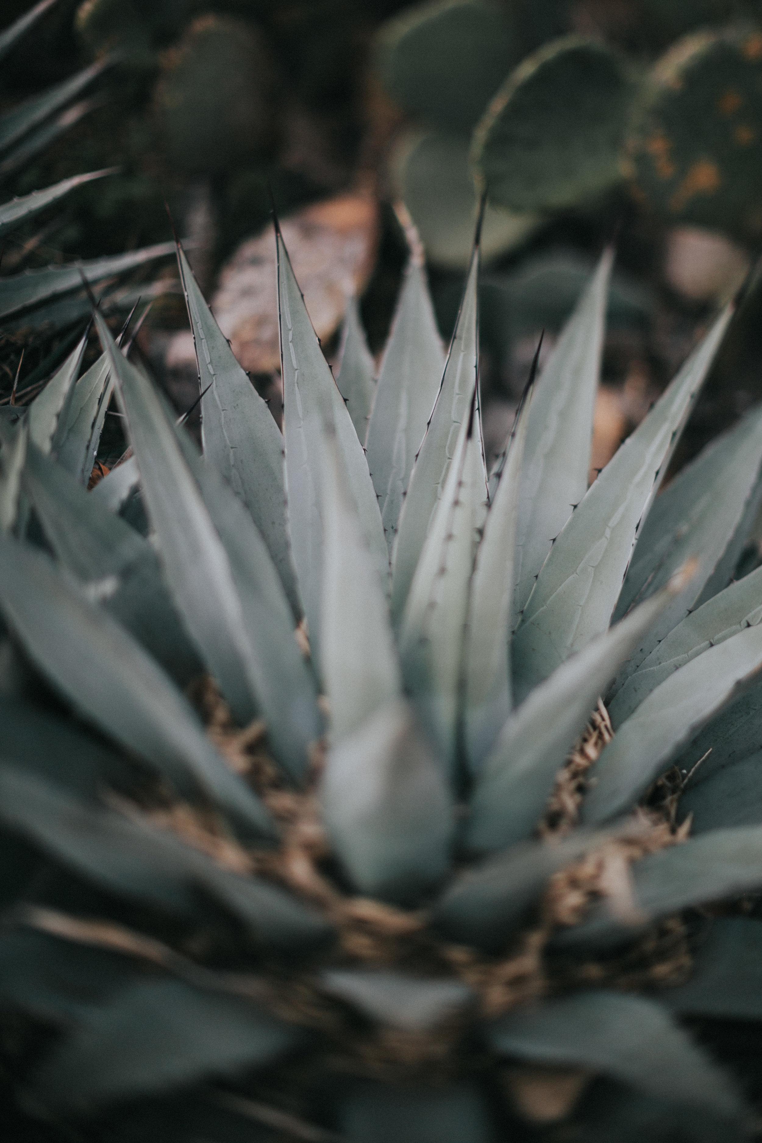 newmexico-7.jpg