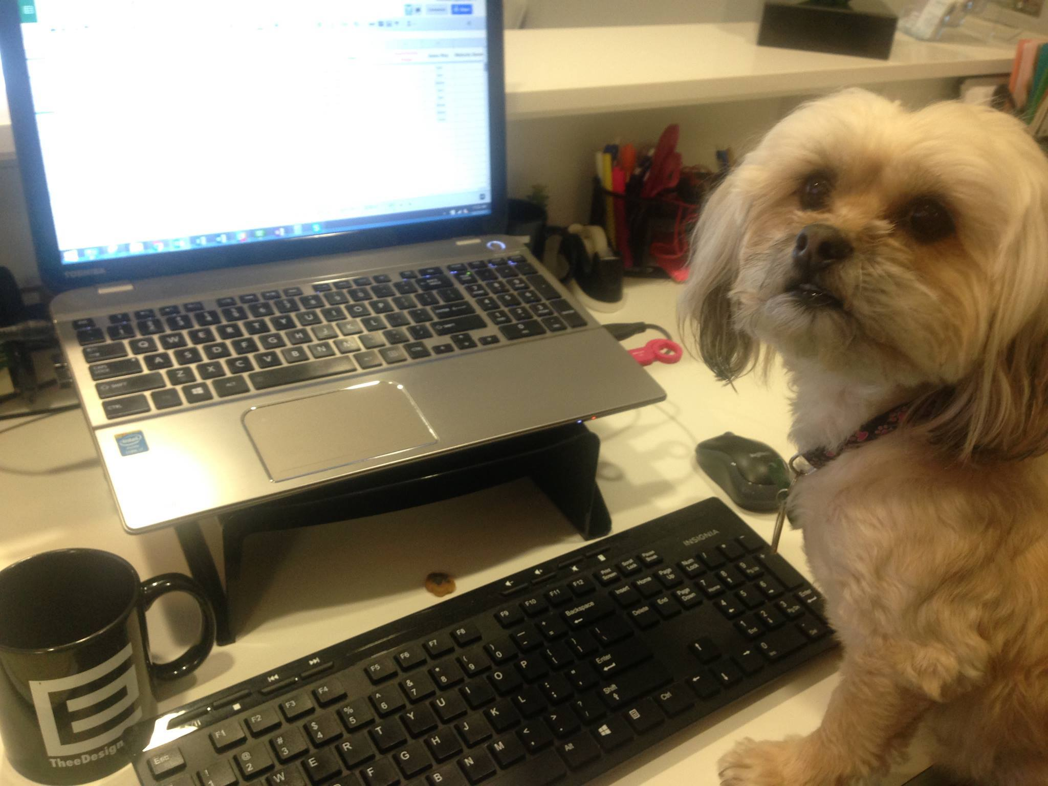 Willow becomes TheeDesign's Social Media Director for a day. Lookout Facebook!