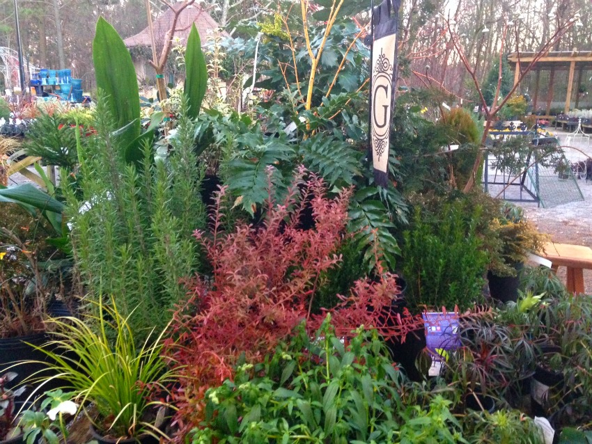 Hardy Winter Perennials