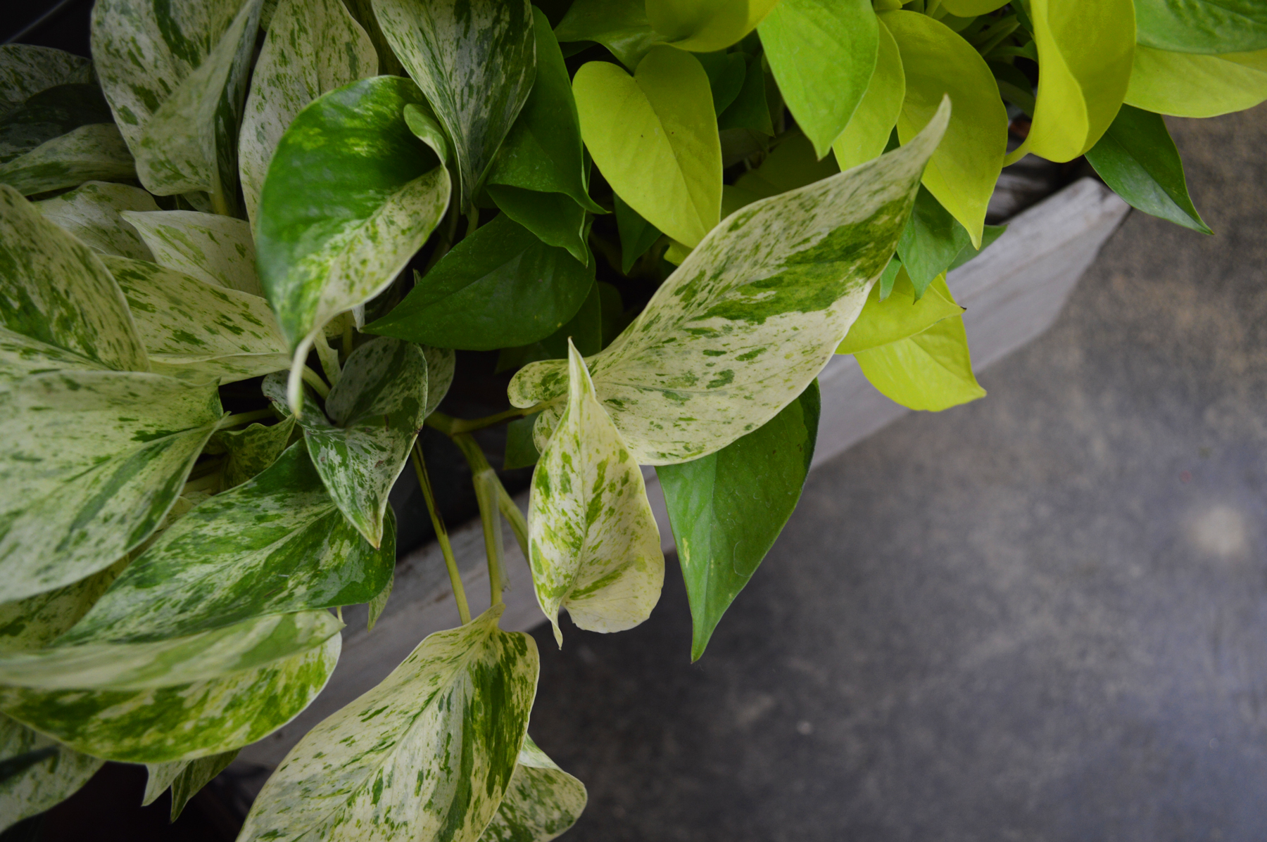 Easy-care Plants