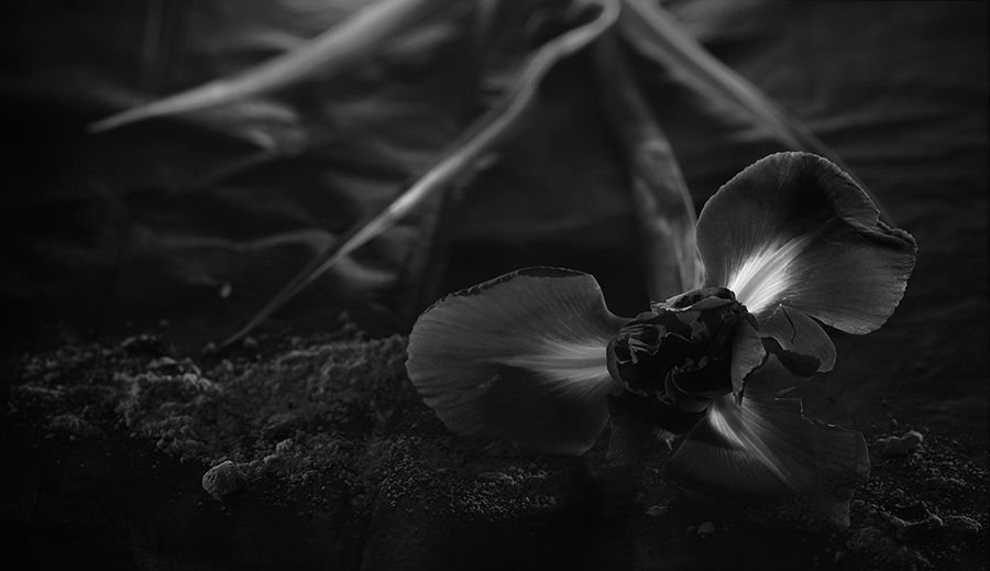 parfums-IRIS.jpg