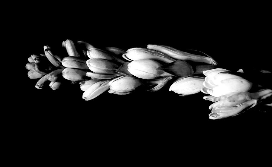 parfums-TUB-16.jpg