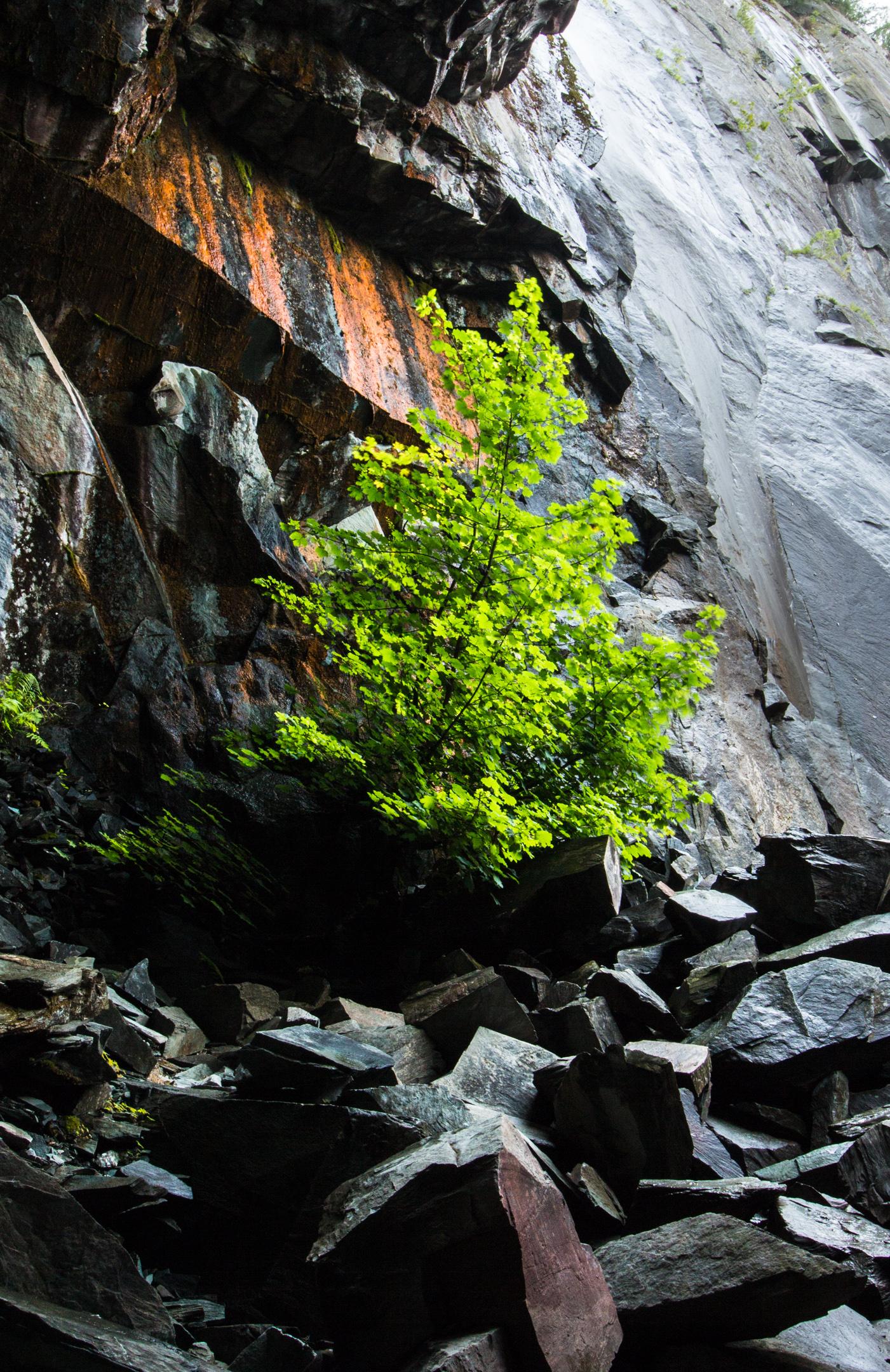 The Hodge Close Tree   18mm   f16   1/2 sec   iso 100   polarising filter