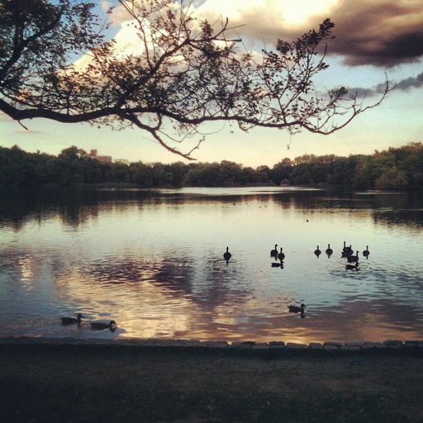 Prospect Park, Brooklyn (Taken with  Instagram )