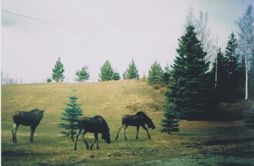 film-grain :     (by  nadine )