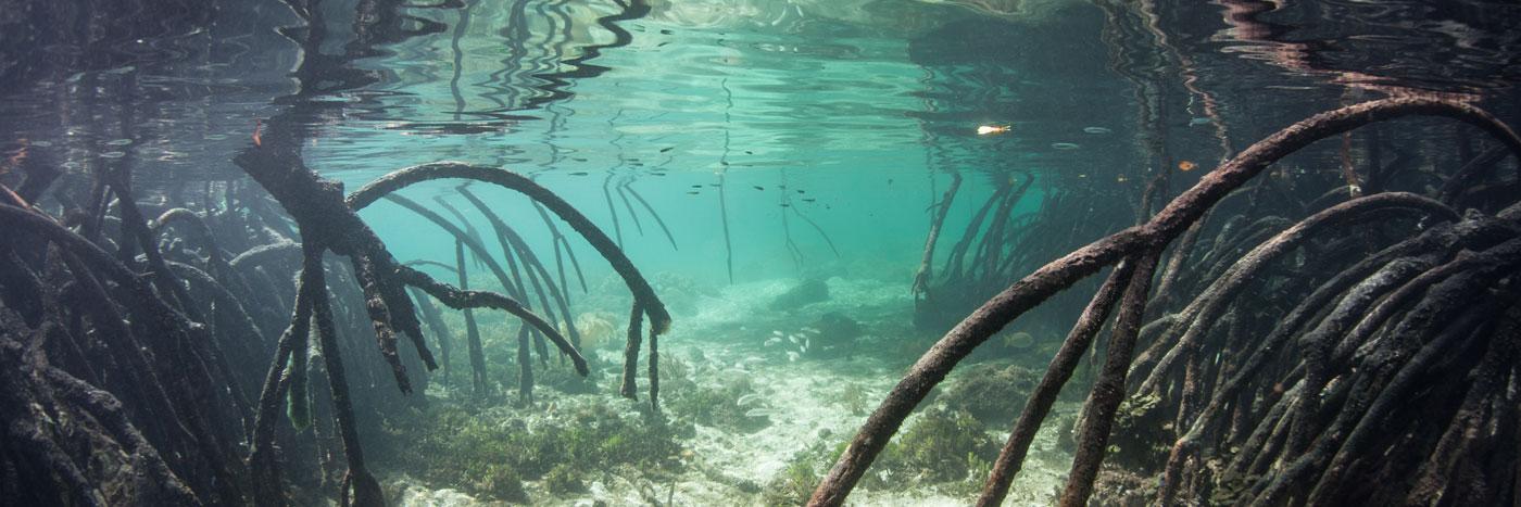 AquariumVinyl_Website_Banner_About.jpg