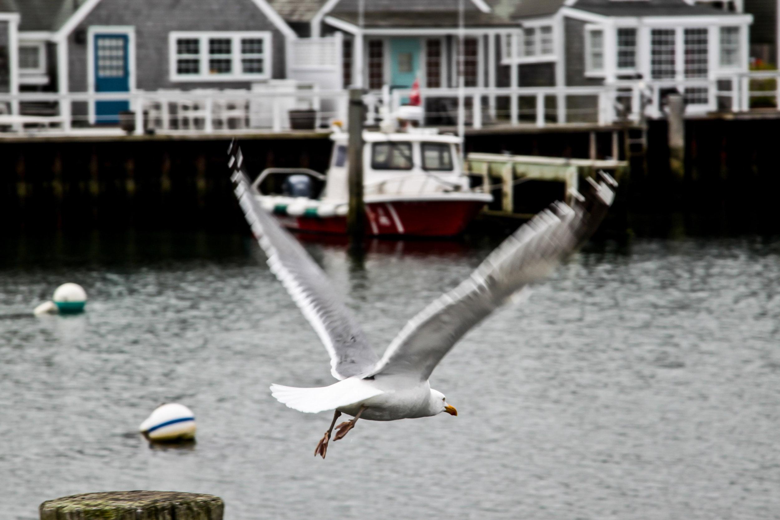 Nantucket Gull Layout 1.jpg