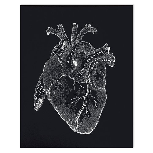 $19.99 VINTAGE ANATOMY BLACK HEART ART PRINT
