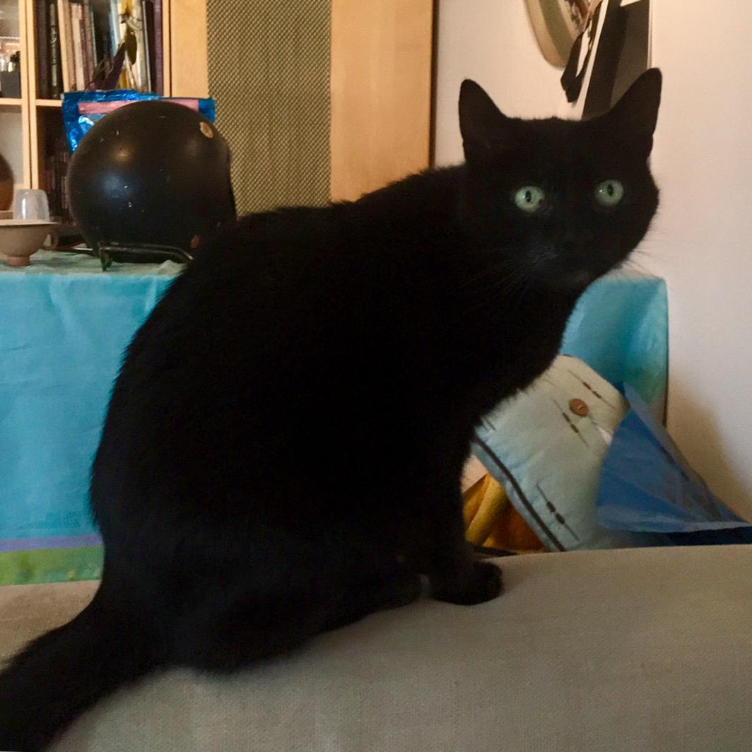 Galy 'The Cat' - Unique Primitive Claw Art