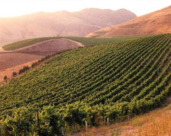 Qupé's Bien Nacido Vineyards
