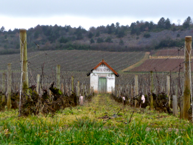 Dormant vineyards in Savigny-les-Beaune