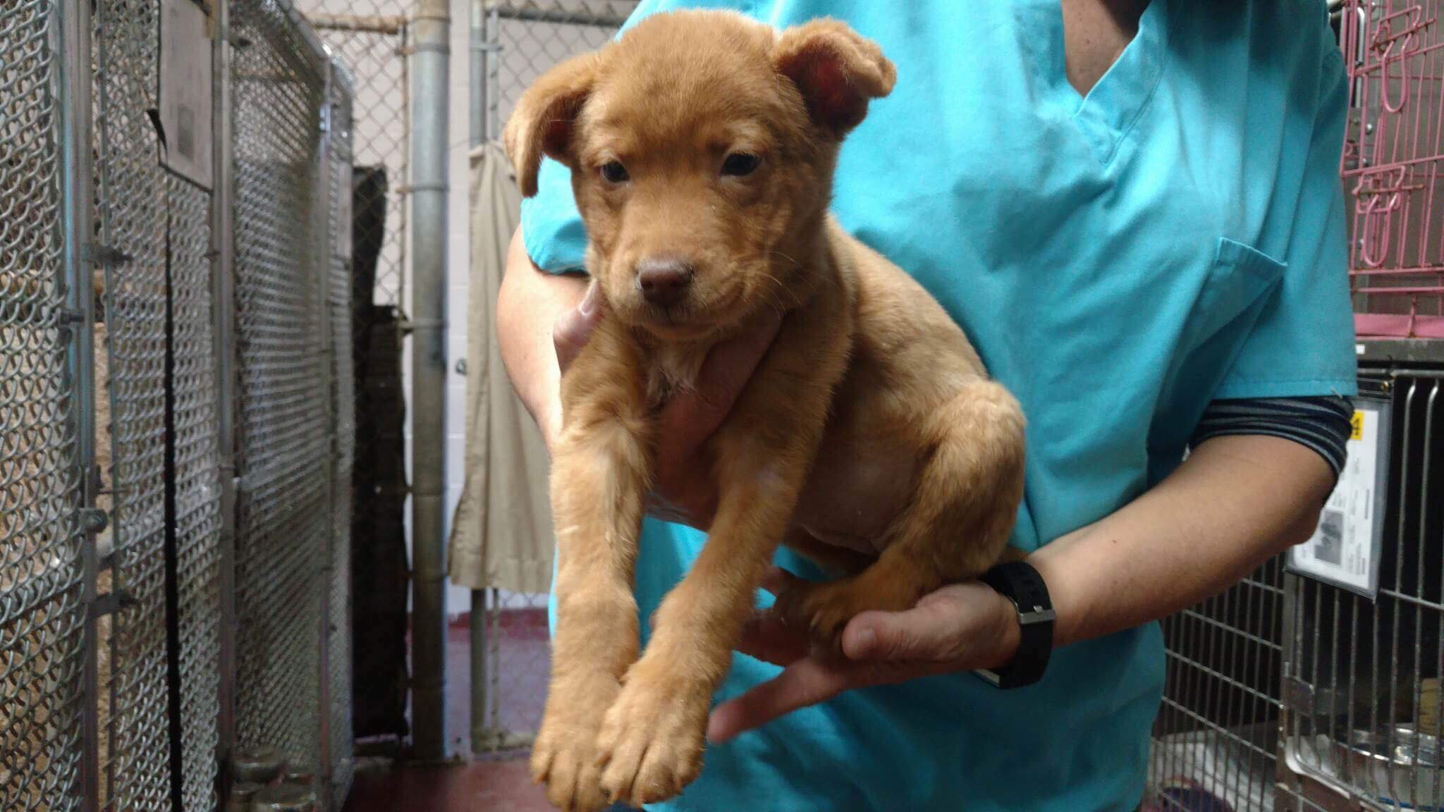 8 week old puppy with broken leg left abandoned for hours at a shelter in Georgia.