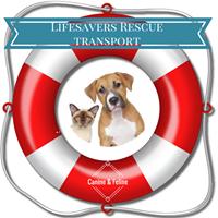 Life Savers Transport.png