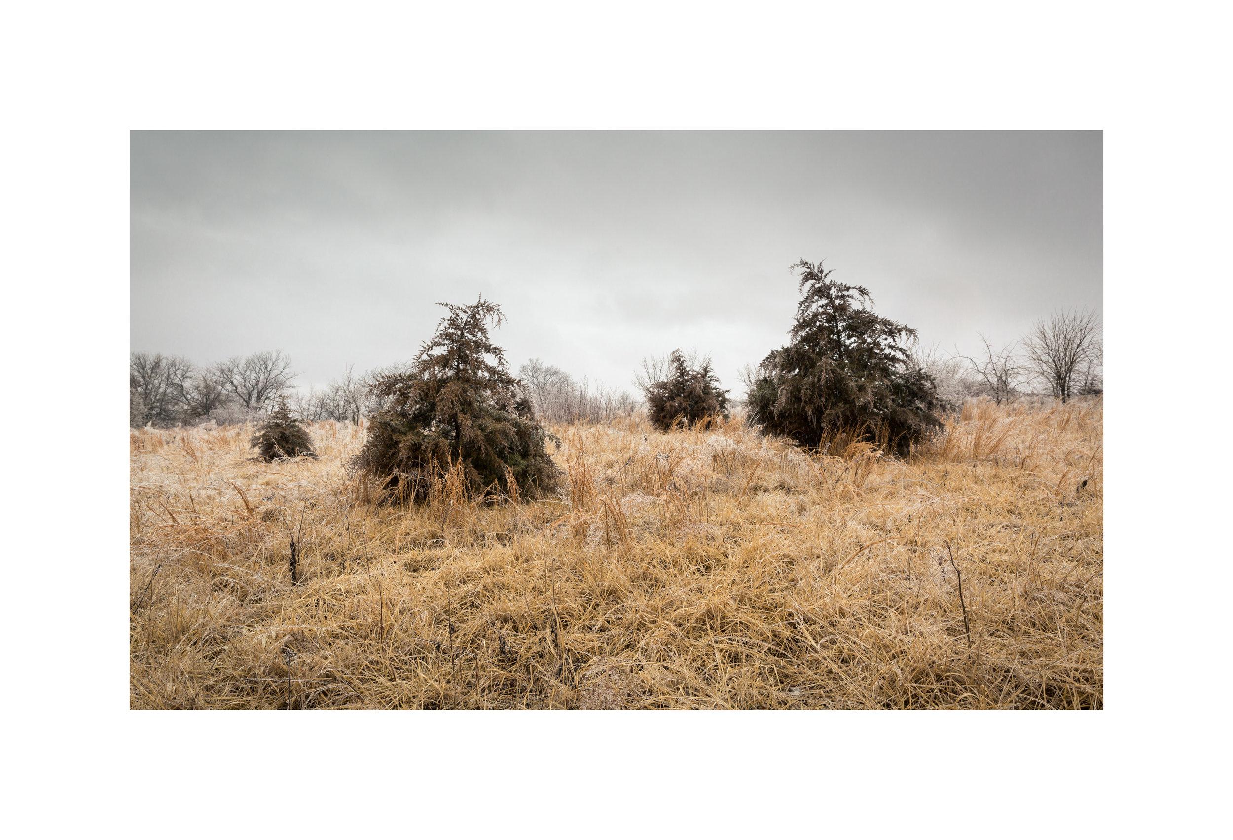 12 - Cedars.jpg