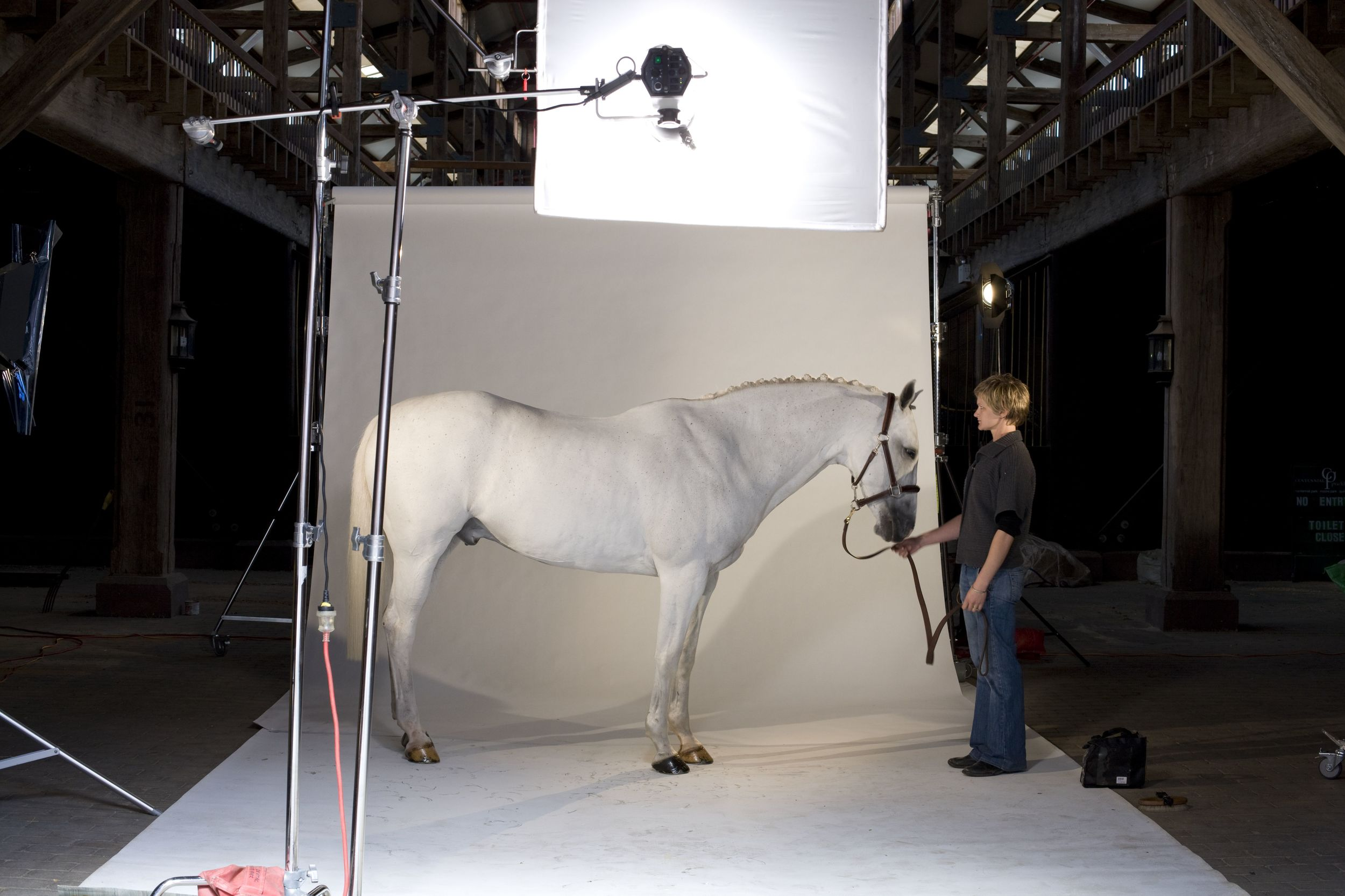 Max (RIP), one of Palomine Productions' foundation equine superstars. This shot was taken from behind the scenes of the Grazia  Hot to Trot  feature in 2009.